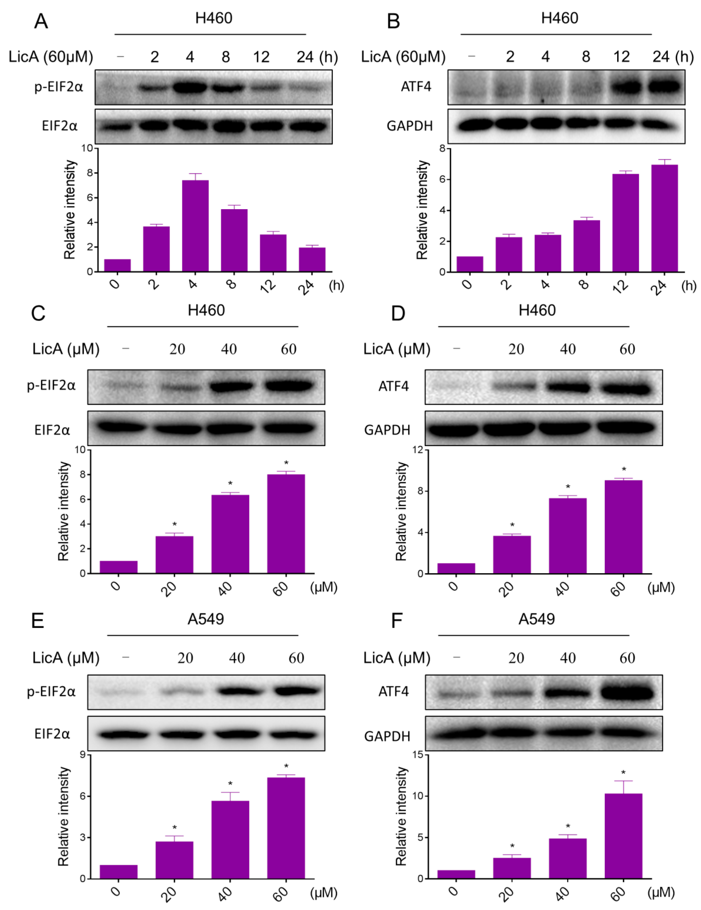 ijms free full text licochalcone a inhibits the proliferation