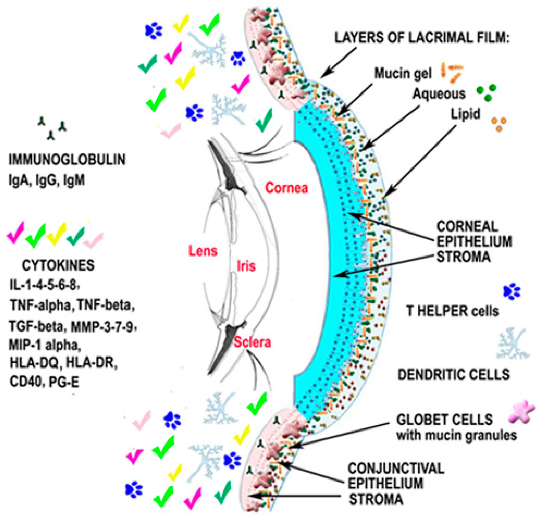 Ijms Free Full Text Analysis Of The Pathogenic Factors