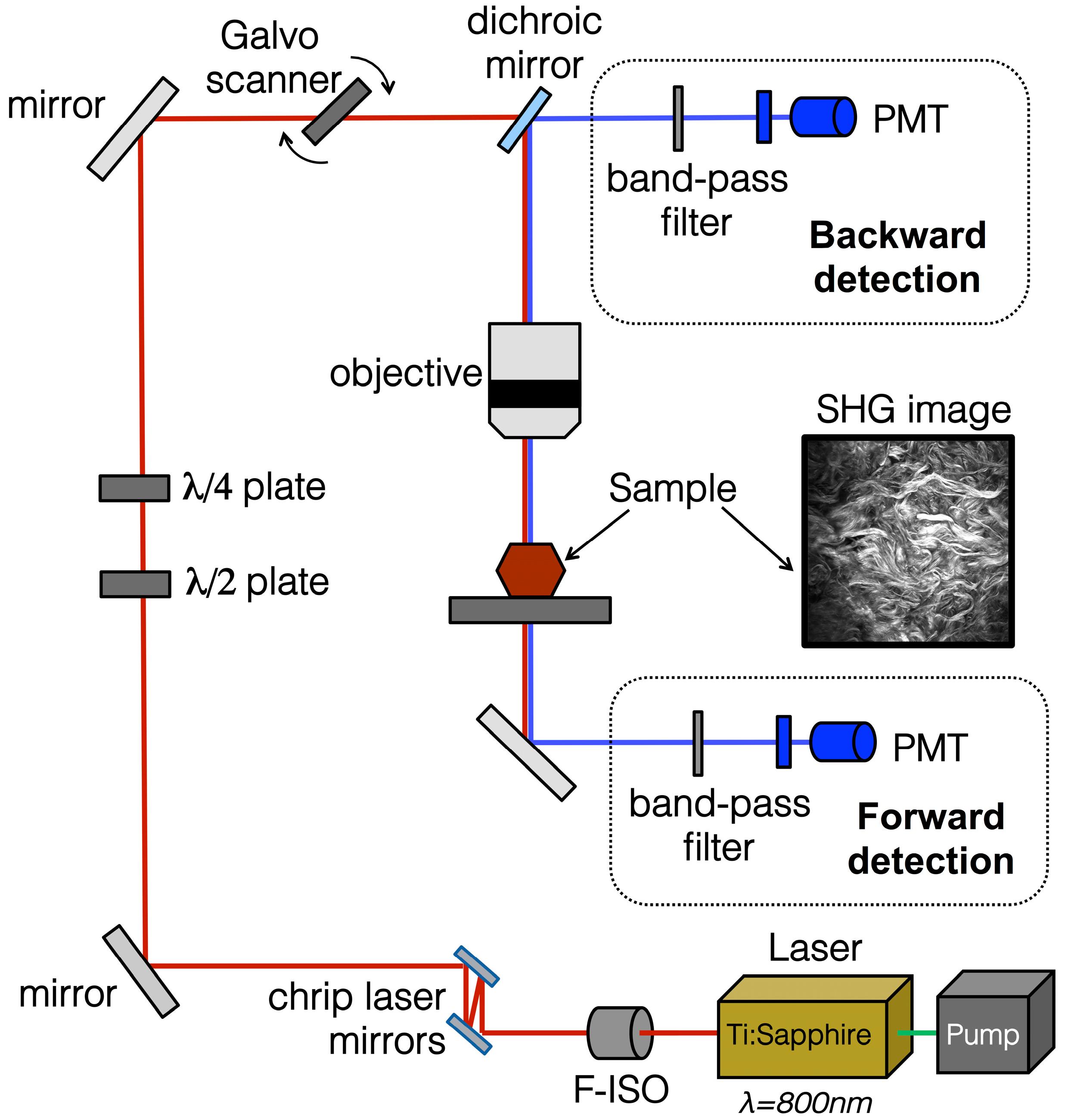 Ijms Free Full Text Imaging Collagen In Scar Tissue Basic Wiring Schematics Power King 1620 18 01772 G004
