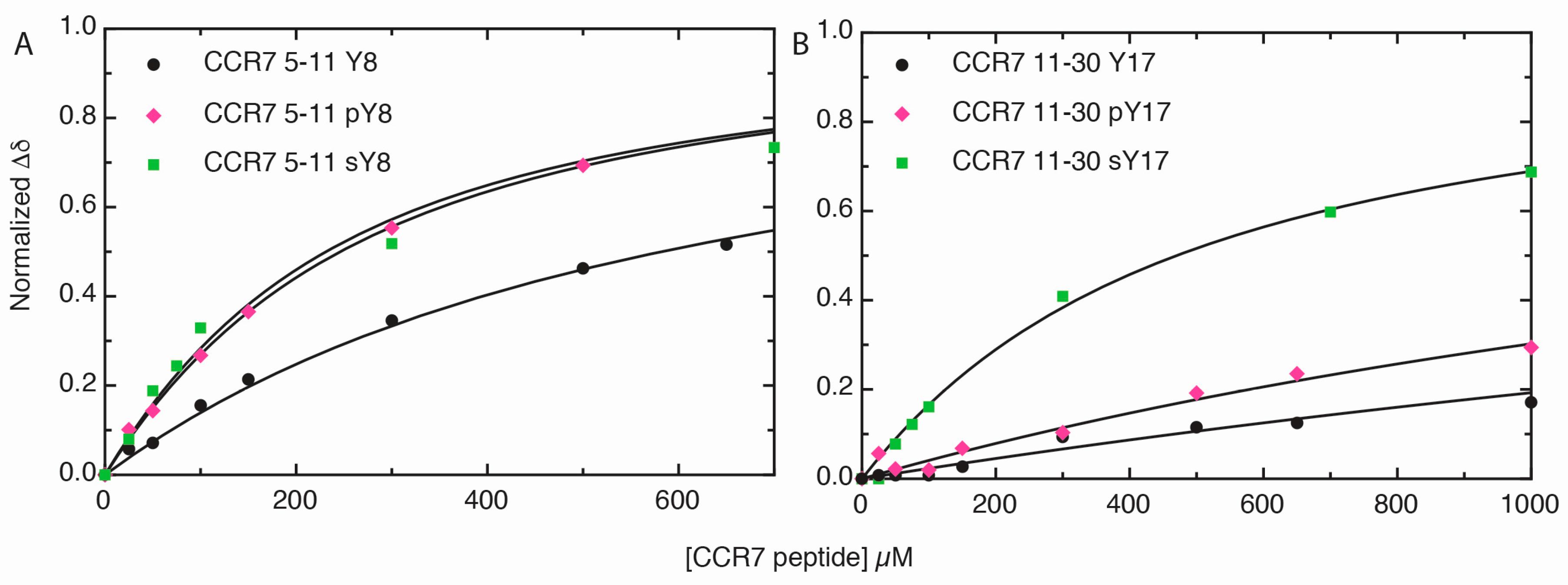 IJMS   Free Full-Text   CCR7 Sulfotyrosine Enhances CCL21