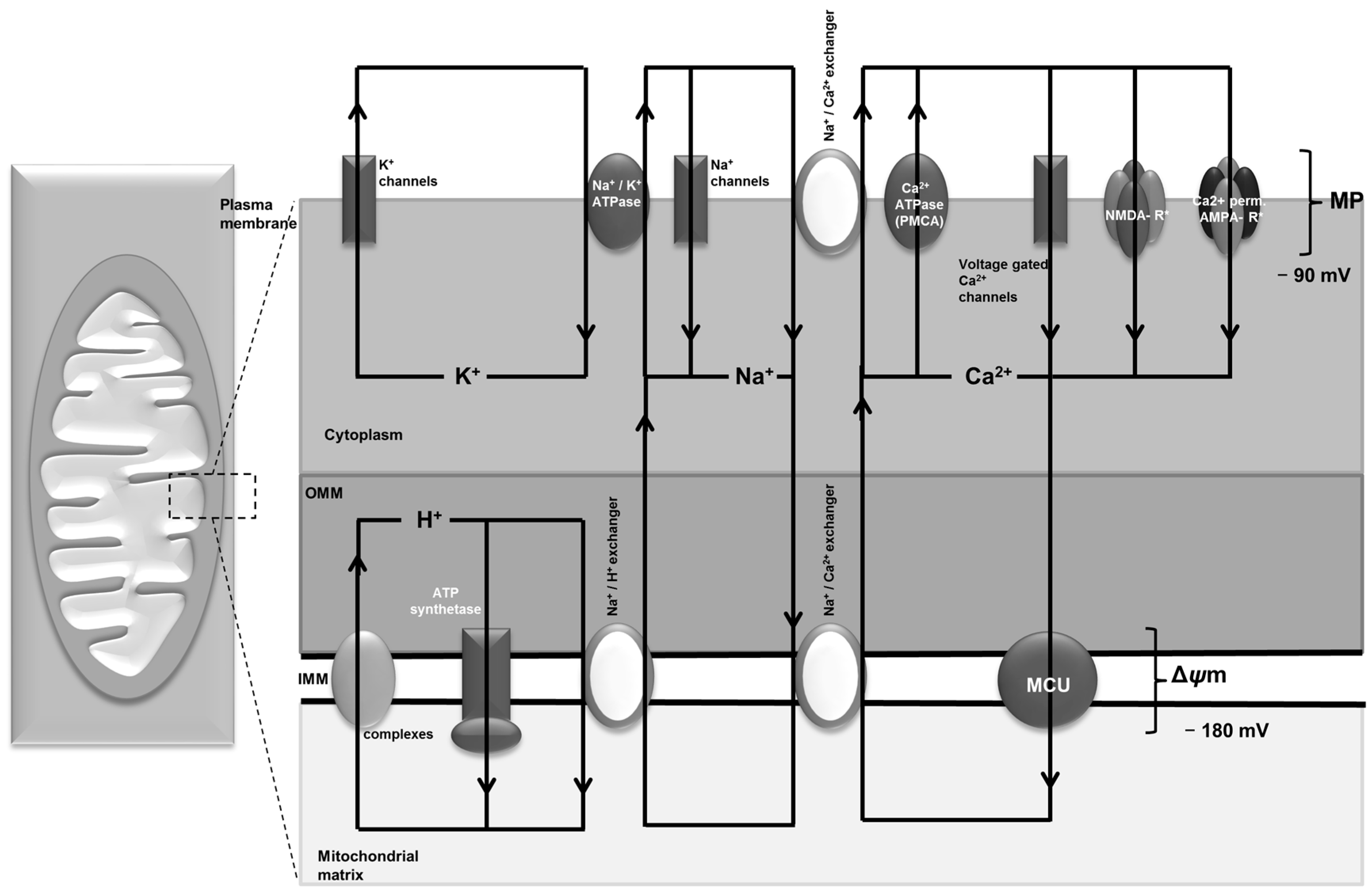 Ijms Free Full Text Metabolic And Homeostatic Changes In Something Either The Schematic Of Driver Circuit Or With No
