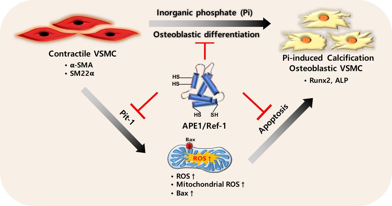 Inorganic Phosphate IJMS | Free Ful...
