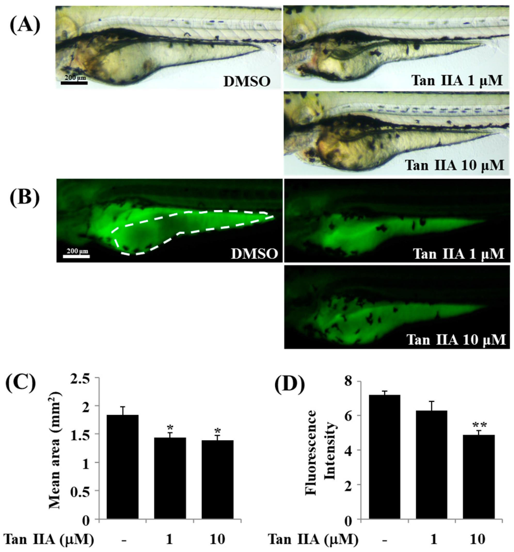 IJMS   Free Full-Text   Anti-Adipogenic Effects on 3T3-L1