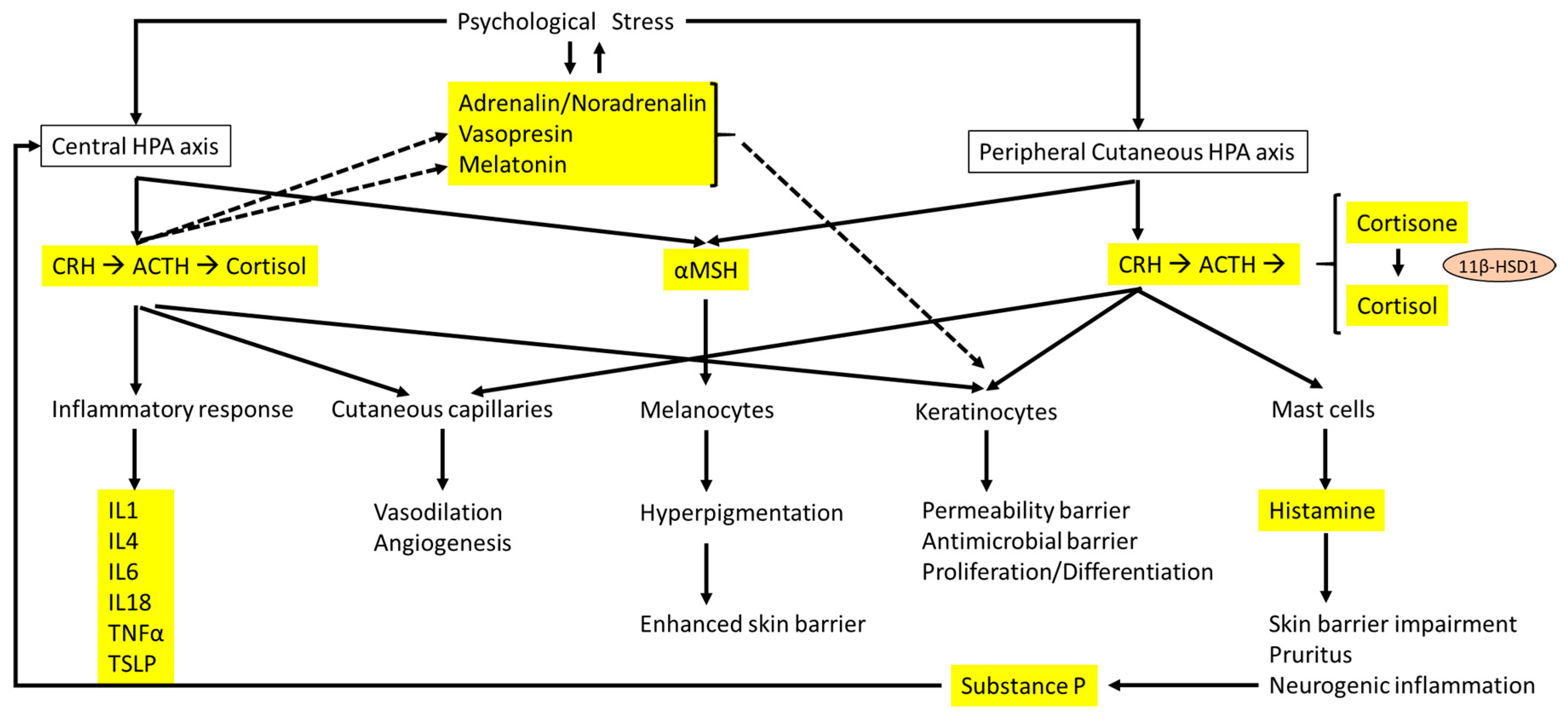 IJMS Free Full Text Association between Stress and the
