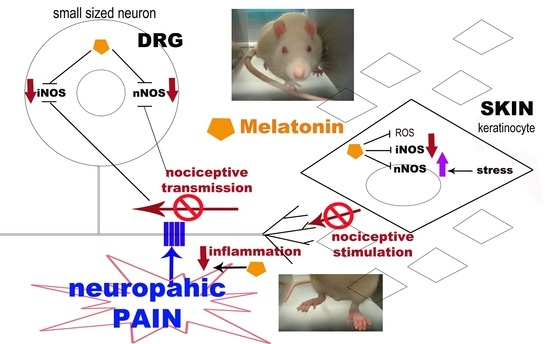 IJMS | Special Issue : Melatonin and Its Analogues