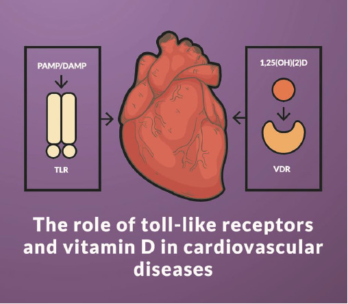IJMS | Free Full-Text | The Role of Toll-Like Receptors and
