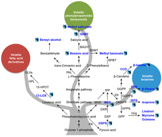 coordination of circadian timing in mammals pdf