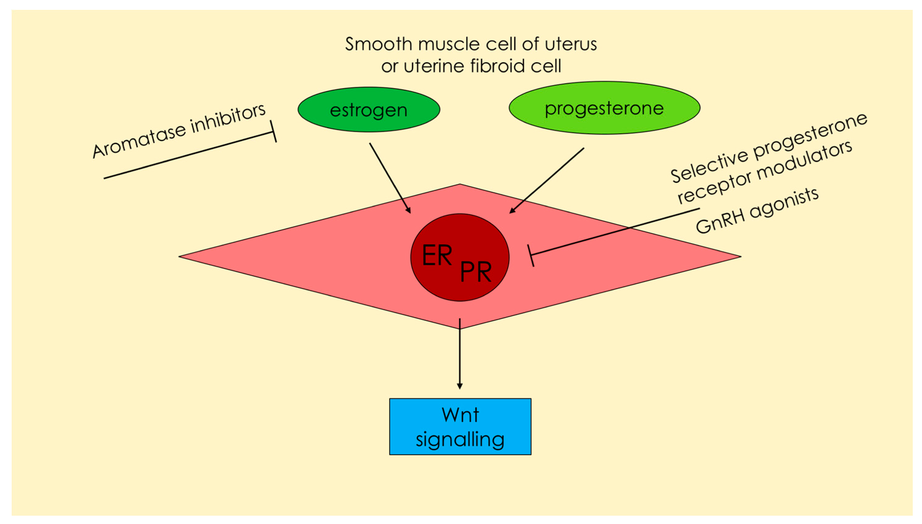 Drugs affecting uterine smooth muscle