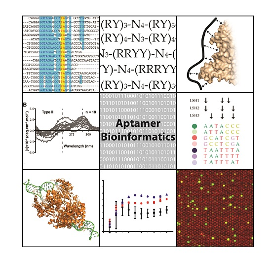 IJMS | Free Full-Text | Aptamer Bioinformatics