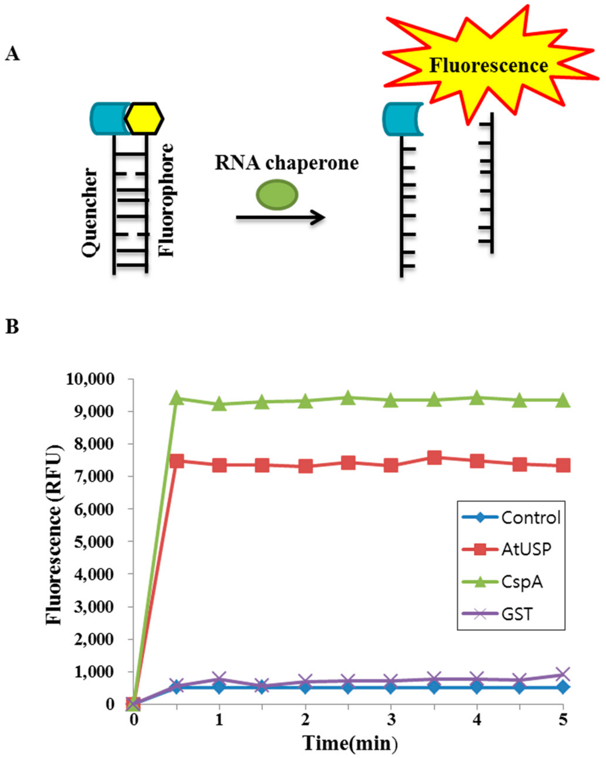 IJMS | Free Full-Text | RNA Chaperone Function of a
