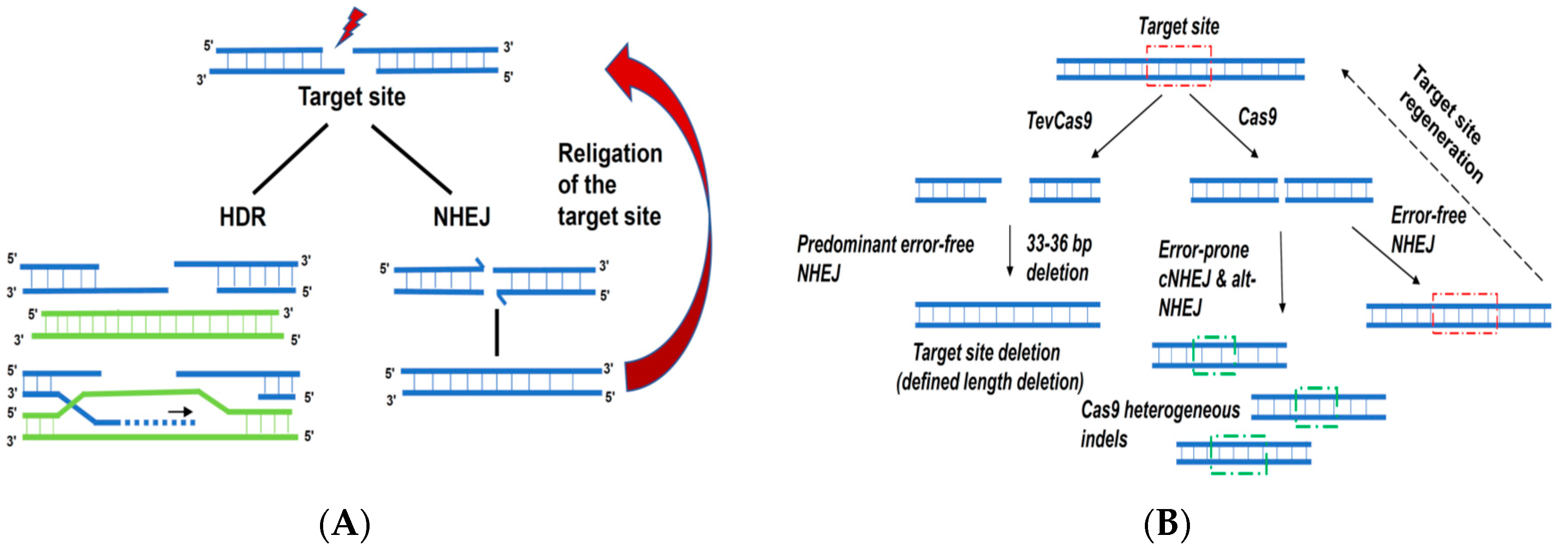 Ijms Free Full Text Applications Of Alternative Nucleases In The