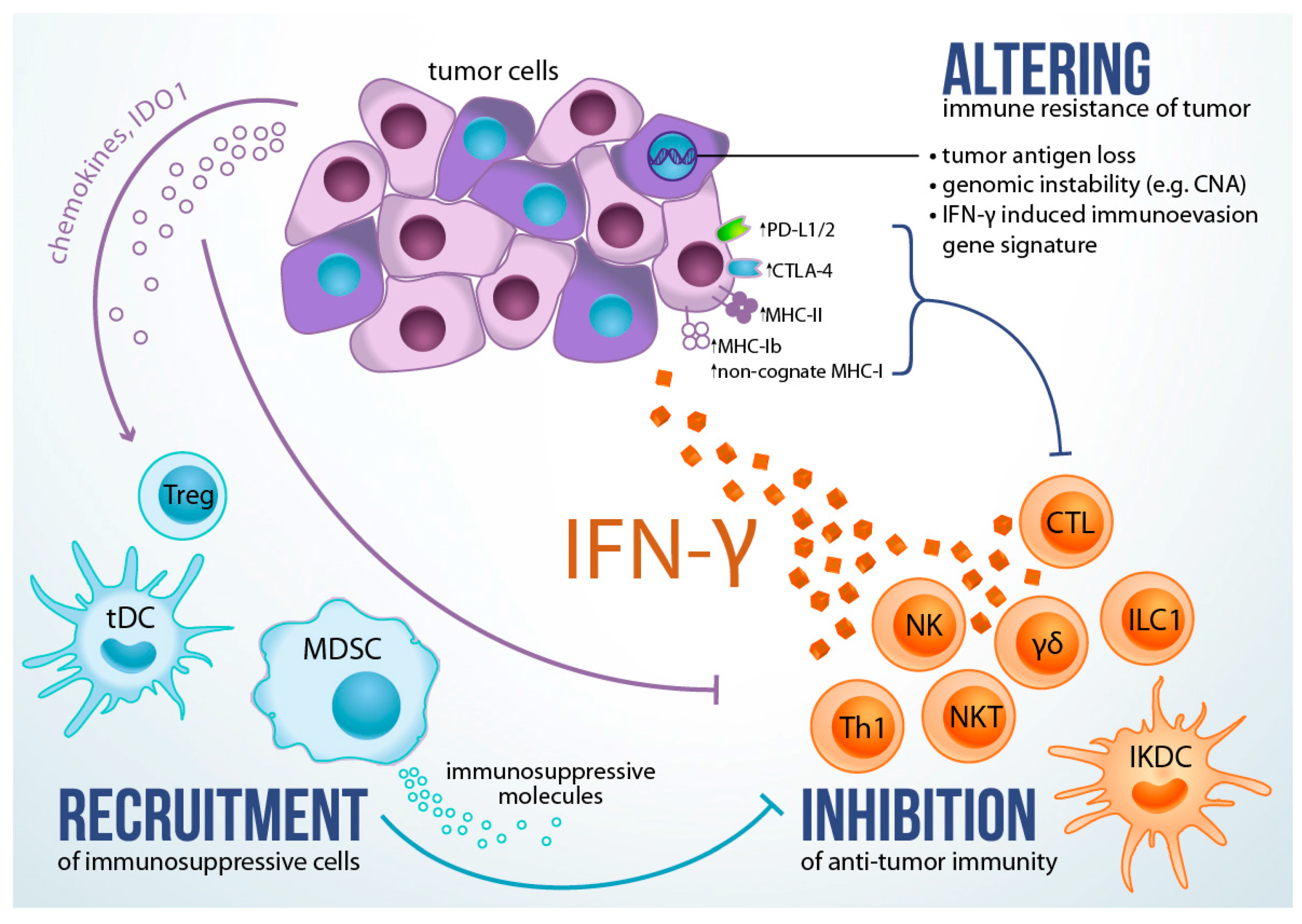 Ijms Free Full Text The Dark Side Of Ifn γ Its Role In