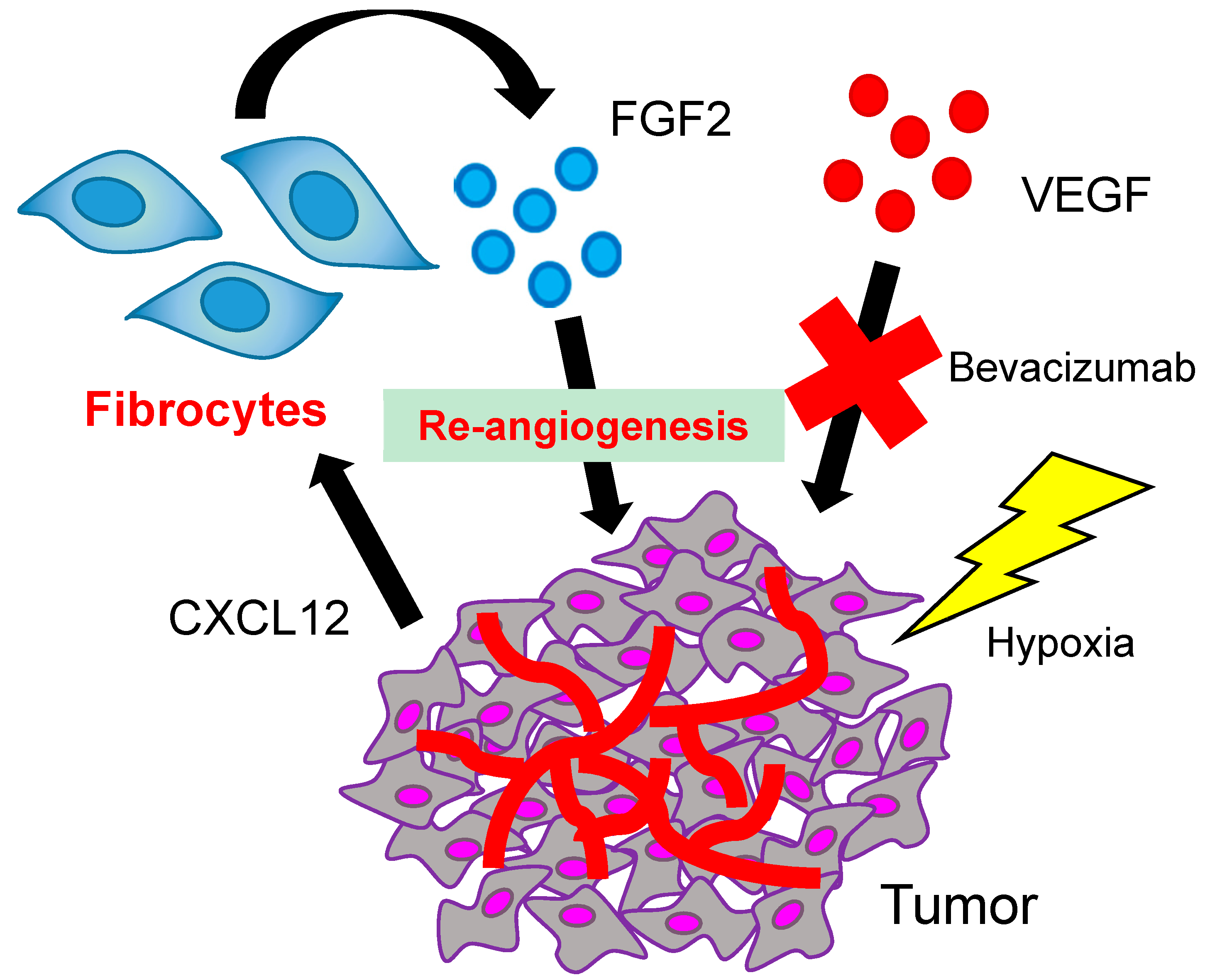 Direct Effects of Anti-Angiogenic Therapies on Tumor Cells