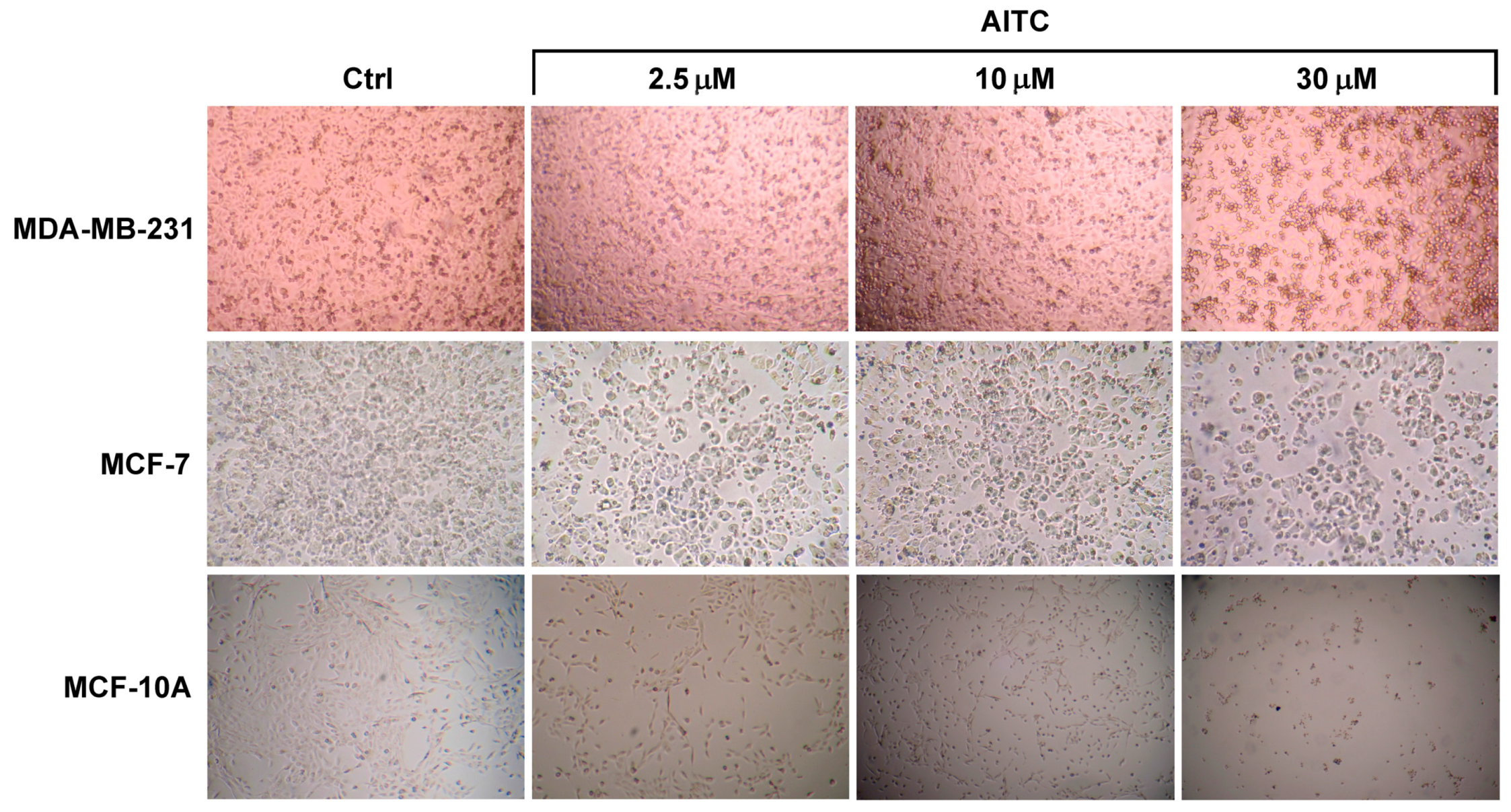 effect of euonine on human uterine leiomyoma cells Cellular and molecular responses of the uterus to embryo implantation can be elicited by locally applied growth the uterine epithelium andyor stromal cells of.