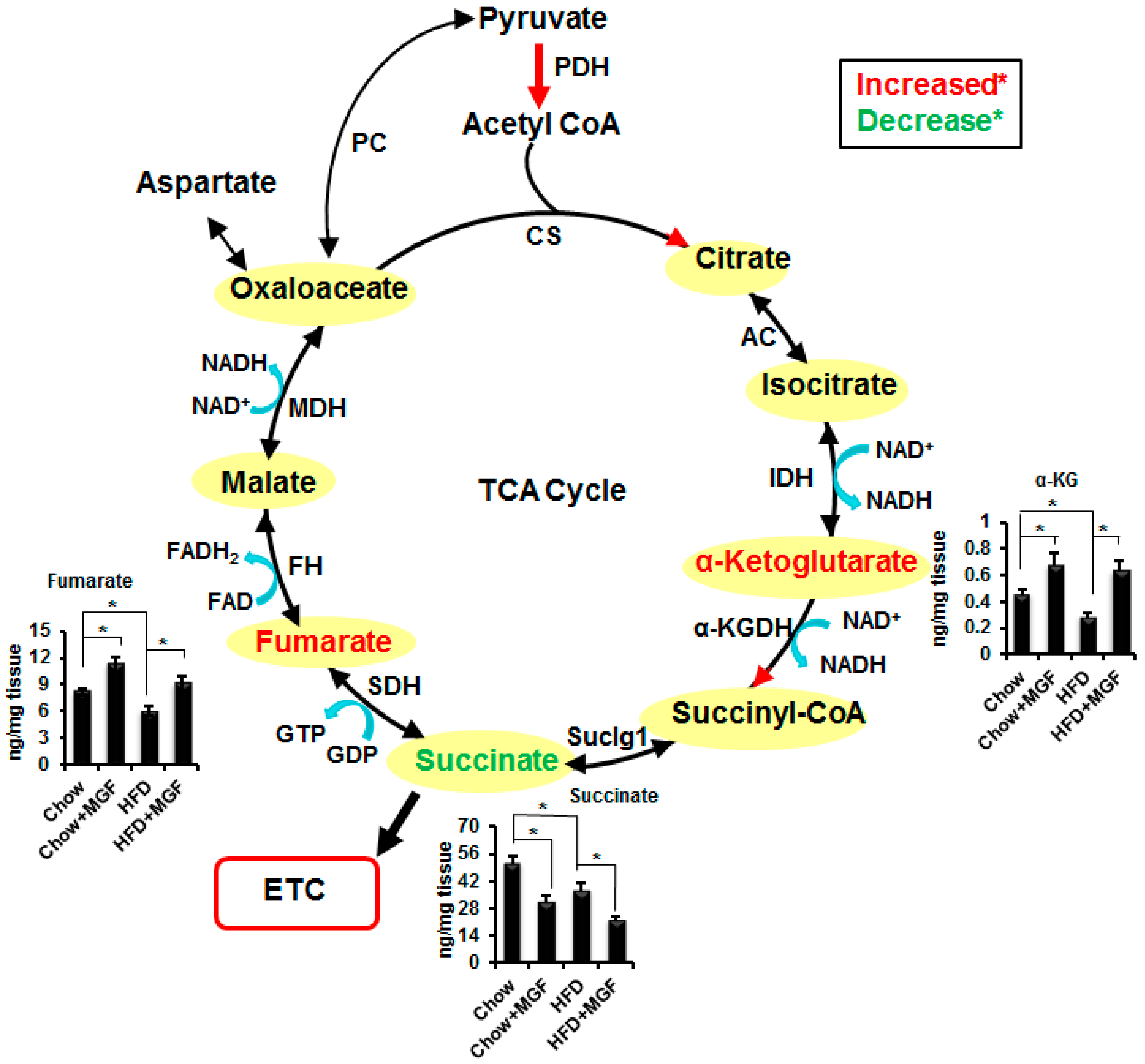 Ijms free full text mangiferin accelerates glycolysis and no pooptronica Images