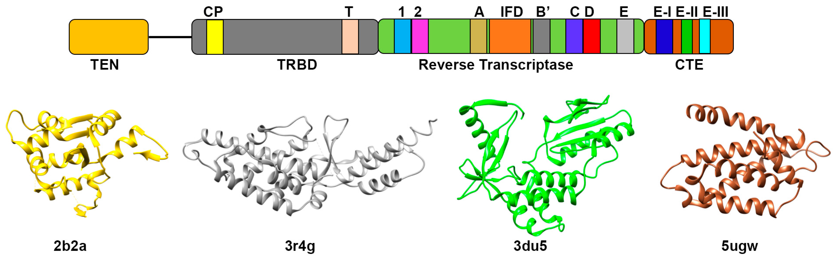 IJMS | Free Full-Text | Current Perspectives of Telomerase Structure ...