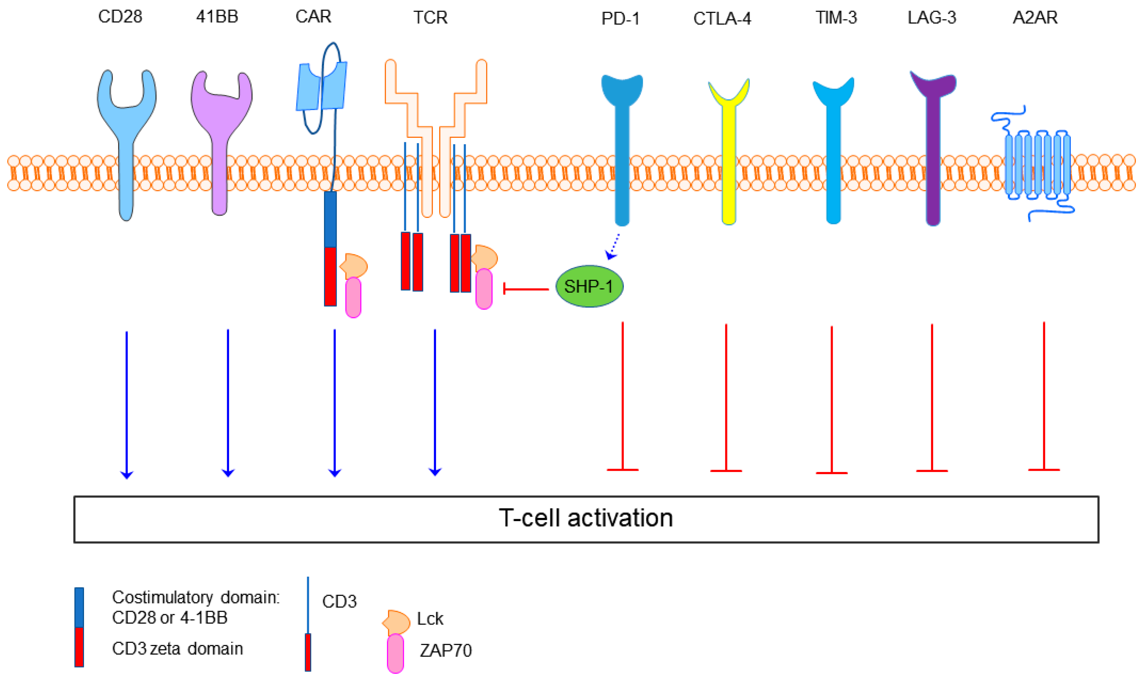 Ijms Free Full Text Incorporation Of Immune Checkpoint
