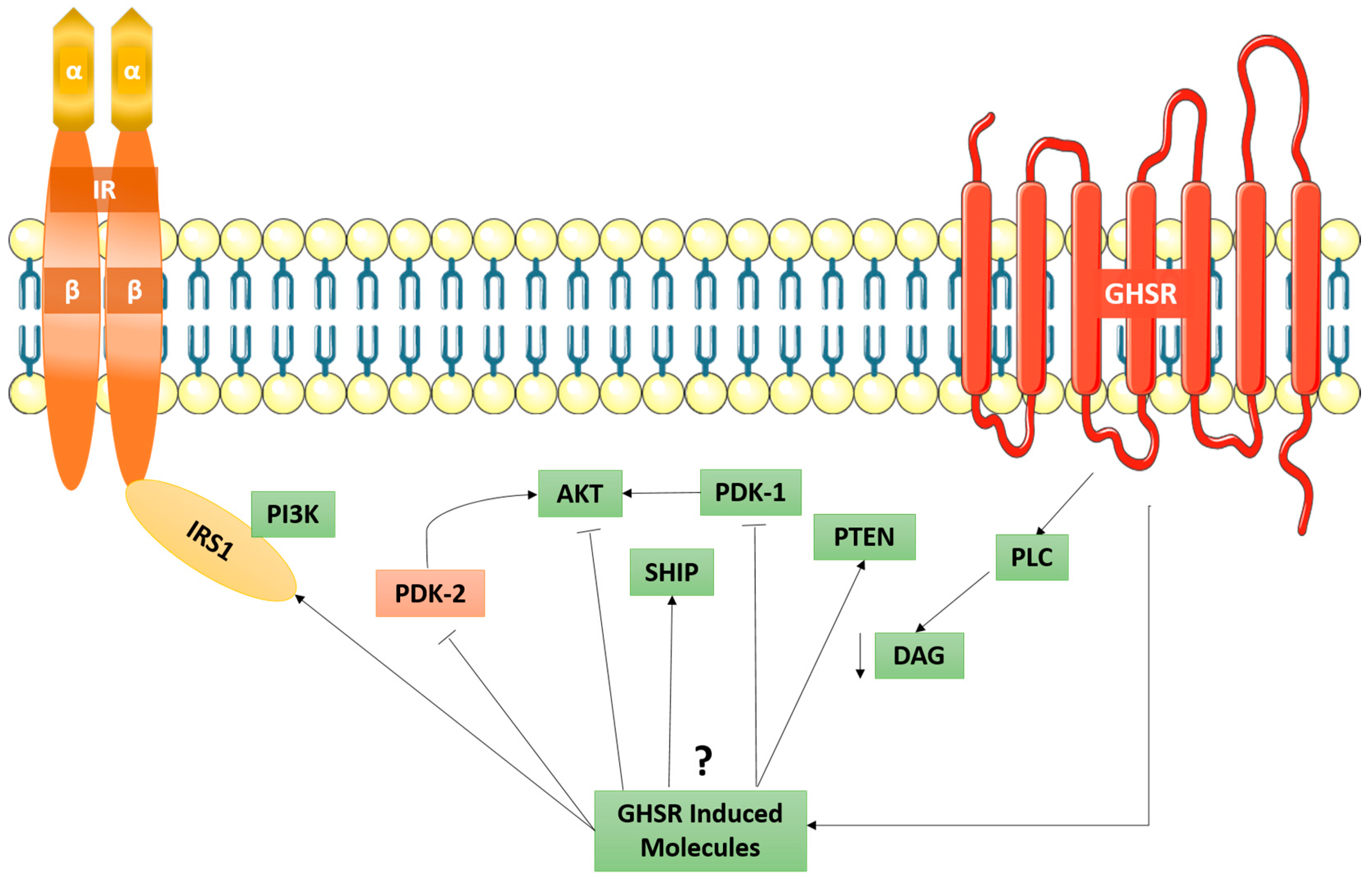IJMS   Free Full-Text   The Biased G-Protein-Coupled