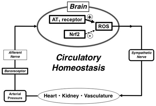 hiv aids and homeostasis Thebodycom fills you in on the topic, does hiv affect homeostasis, with a wealth of fact sheets, expert advice, community perspective, the latest news/research, and much more.