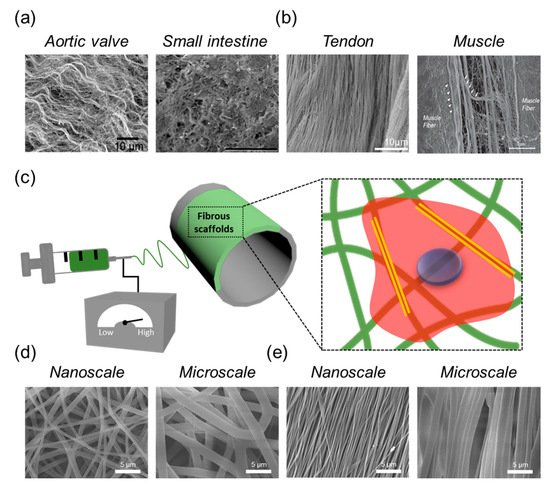 IJMS | Special Issue : Novel Biomaterials for Tissue