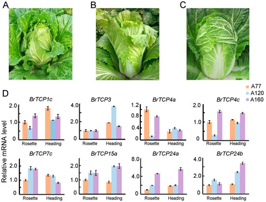 IJMS | Free Full-Text | Genome-Wide Identification and ysis of ... Flower Designs For Raised Garden B E A Html on