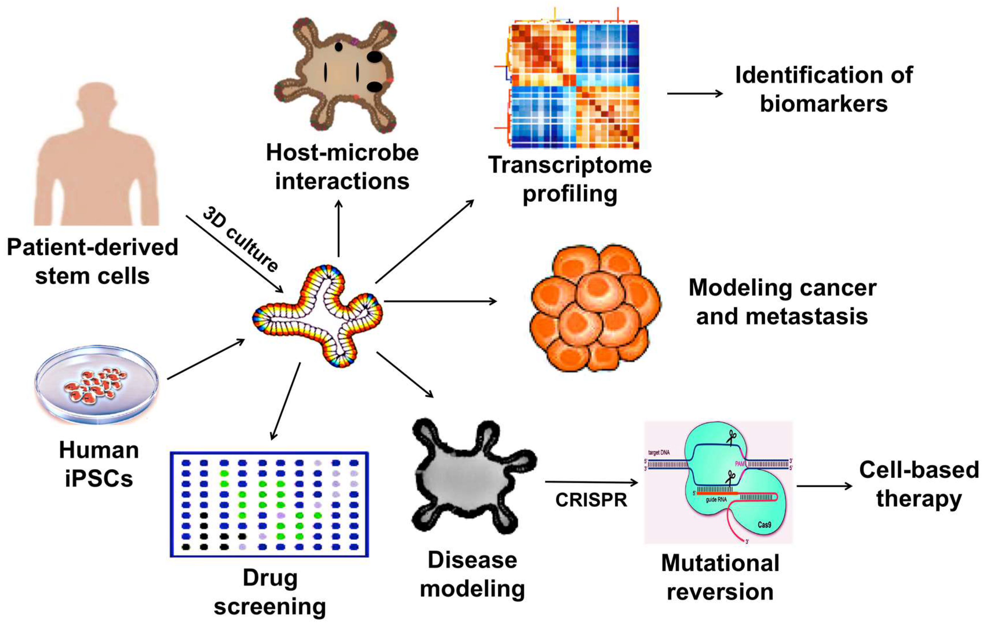 Ijms Free Full Text Disease Modeling Using 3d