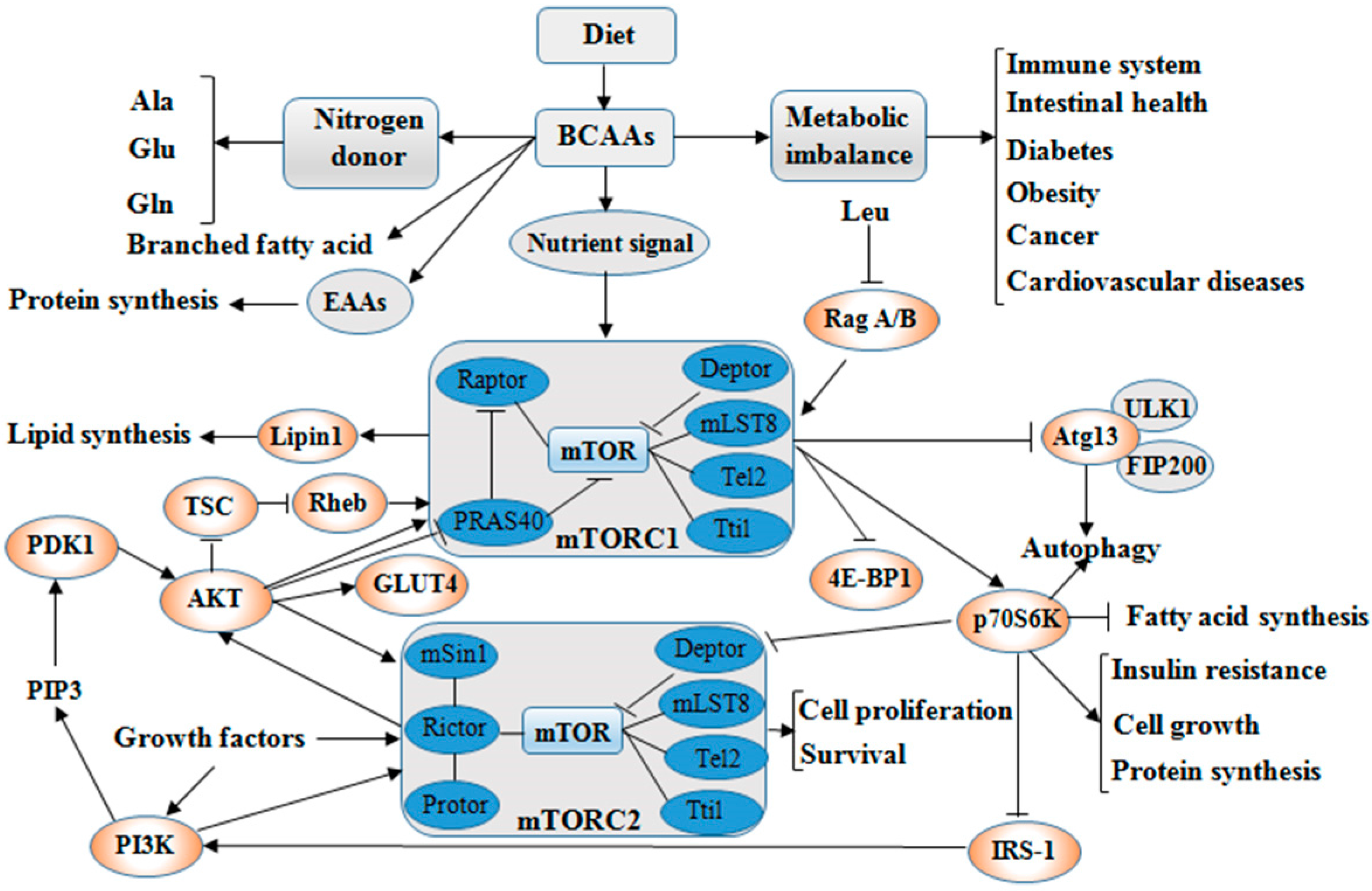 ijms free fulltext branched chain amino acids beyond