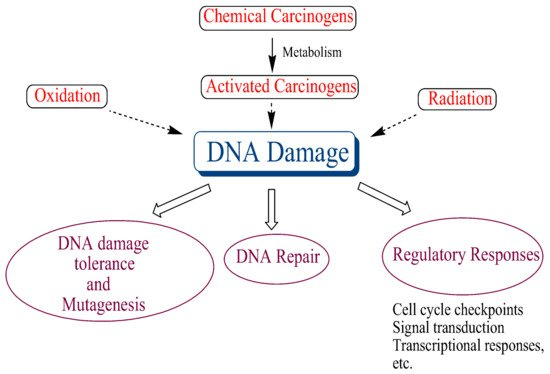 what is the difference between a mutagen and a carcinogen