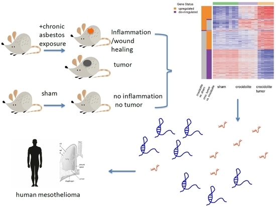 IJMS | Special Issue : Mesothelioma Heterogeneity: Potential