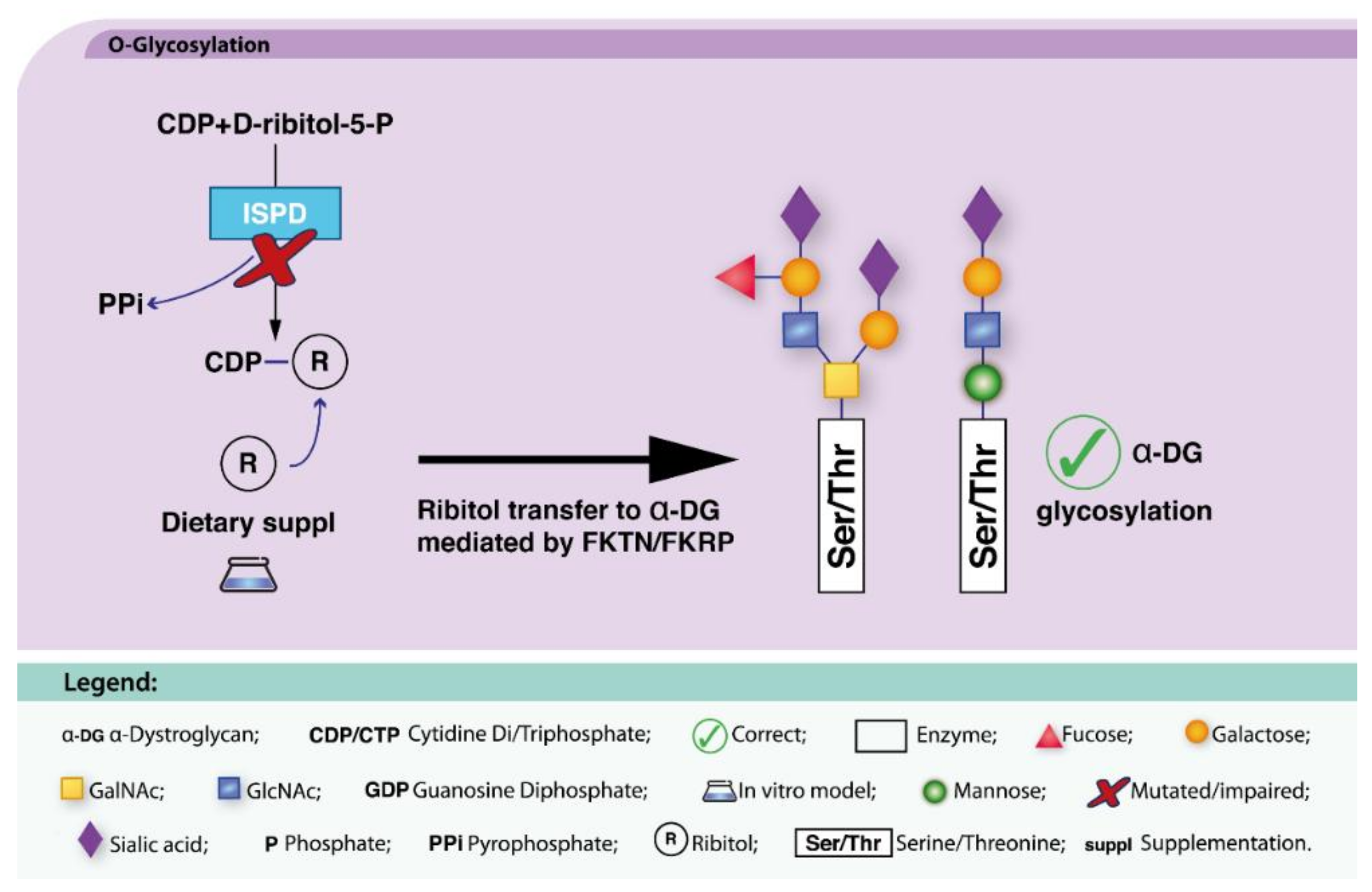 IJMS   Free Full-Text   CDG Therapies: From Bench to Bedside