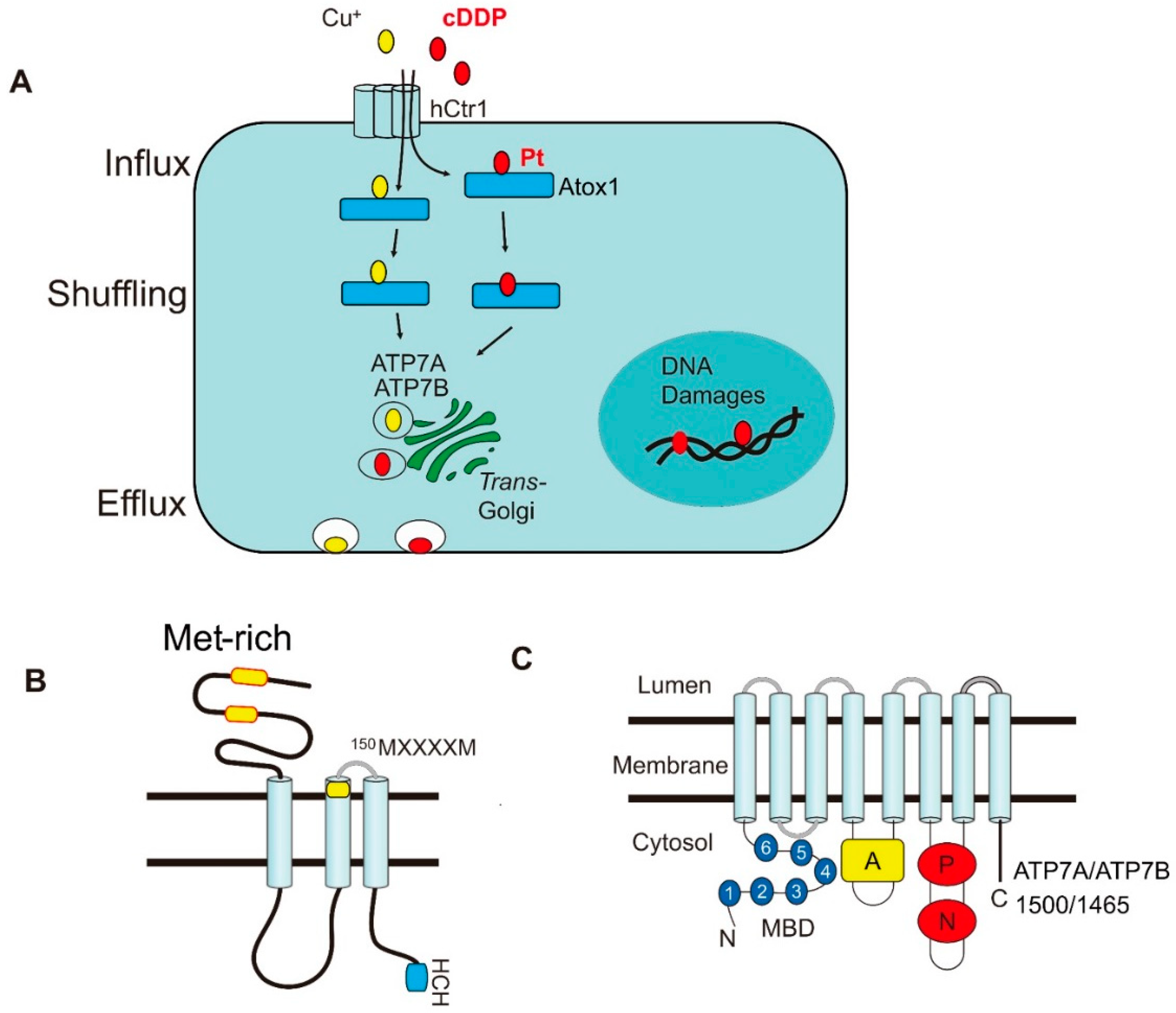IJMS | Free Full-Text | Modulating Chemosensitivity of Tumors to ...
