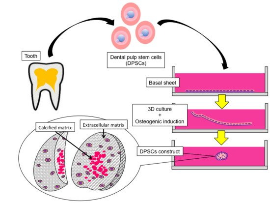 Ijms Free Full Text Dental Pulp Stem Cell Derived