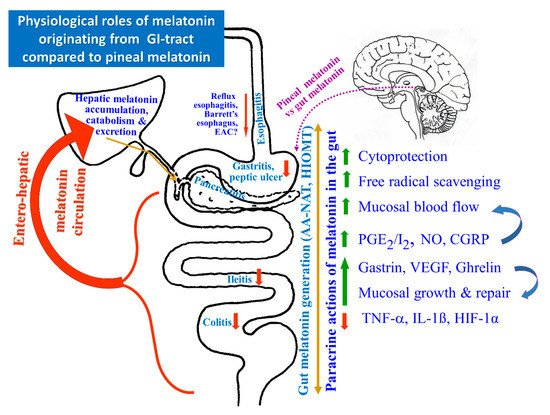IJMS | Special Issue : Melatonin from an Antioxidant to a Classic