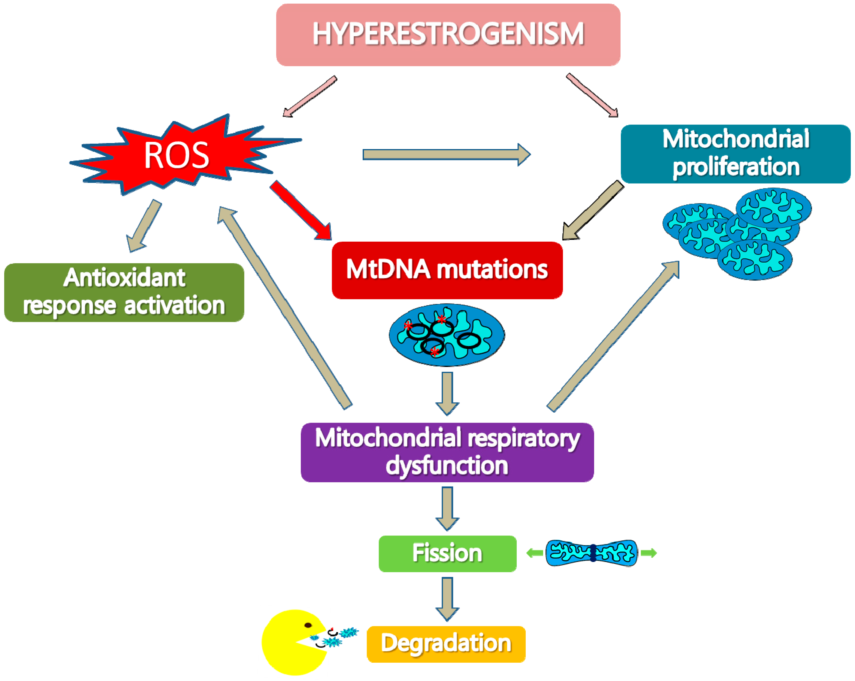 IJMS | Free Full-Text | Mitochondrial Dysfunctions in Type I