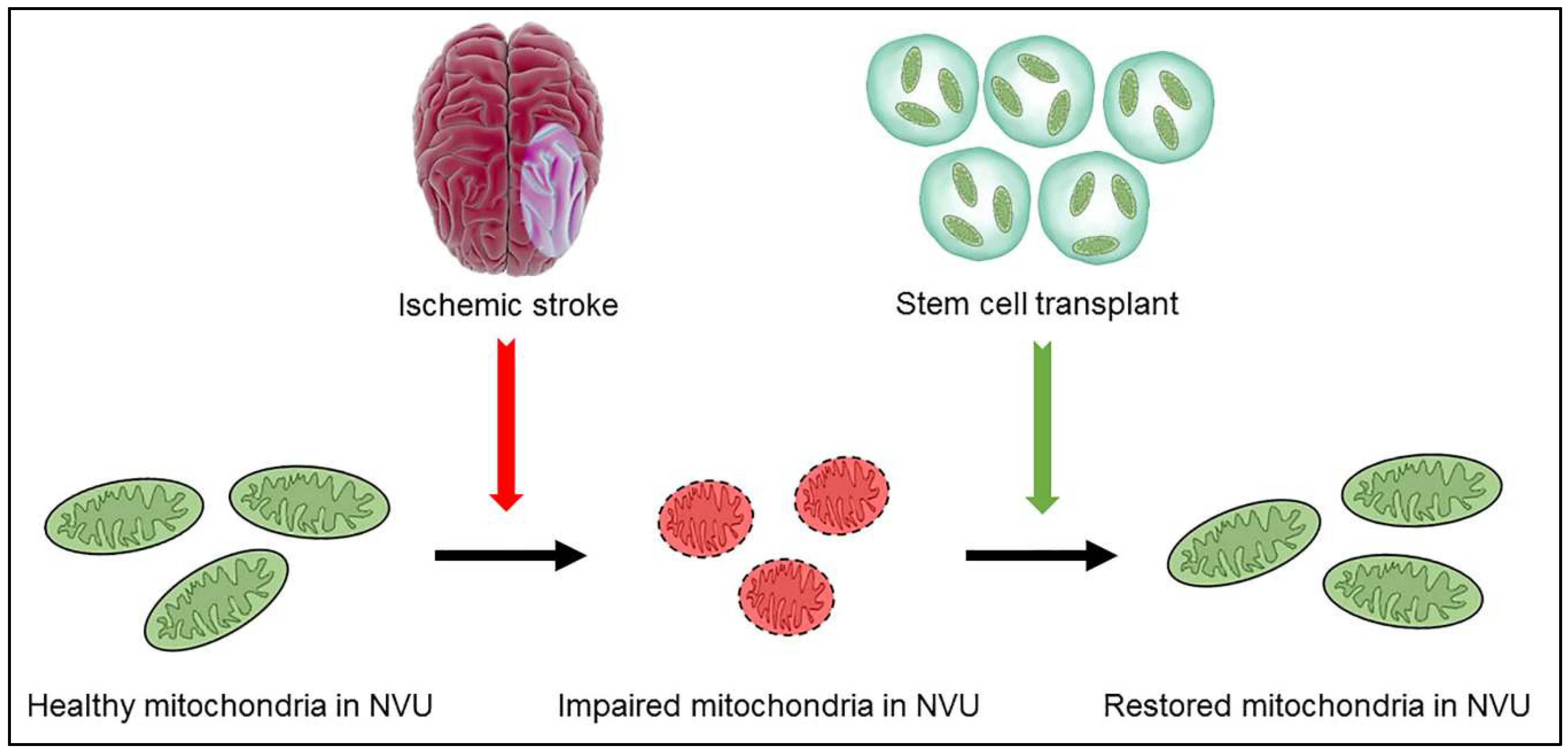 Impaired Recycling Of Mitochondria In >> Ijms Free Full Text Understanding The Role Of