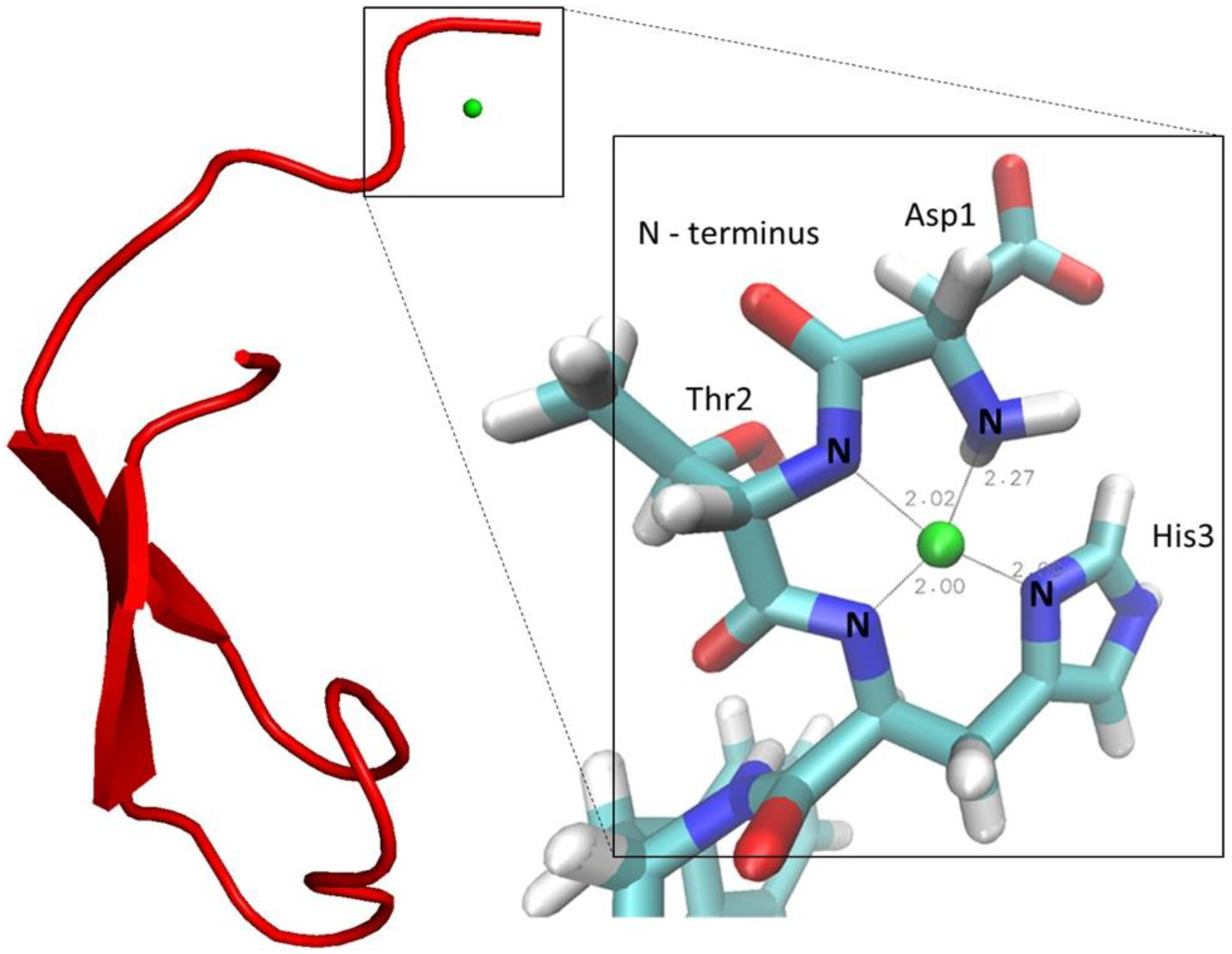 IJMS   Free Full-Text   Investigations of the Copper Peptide