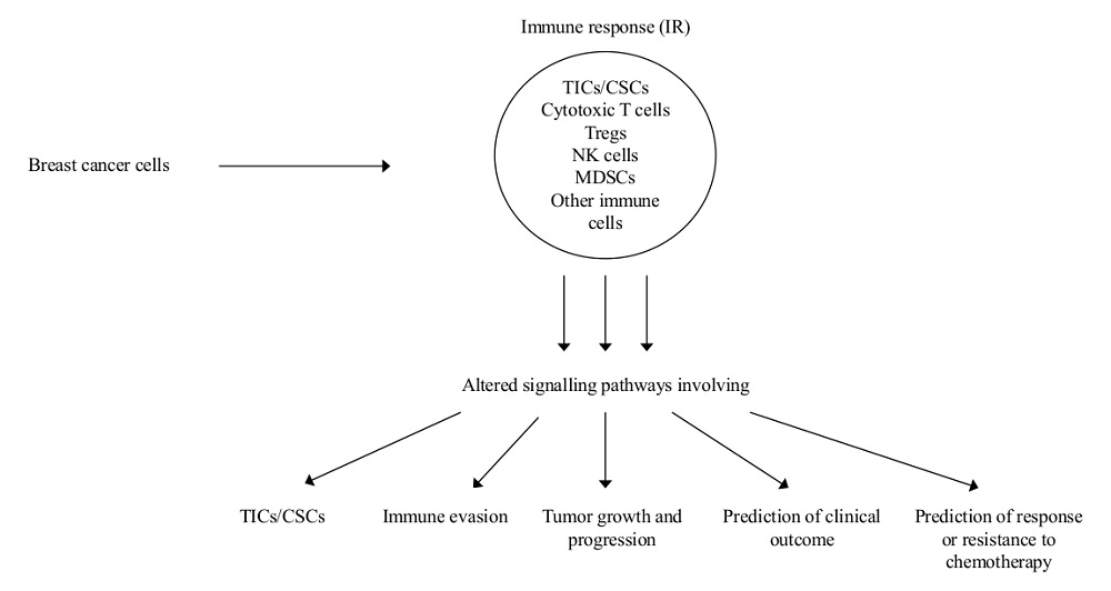 Ijms Free Full Text Alterations Of Signaling Pathways Related To