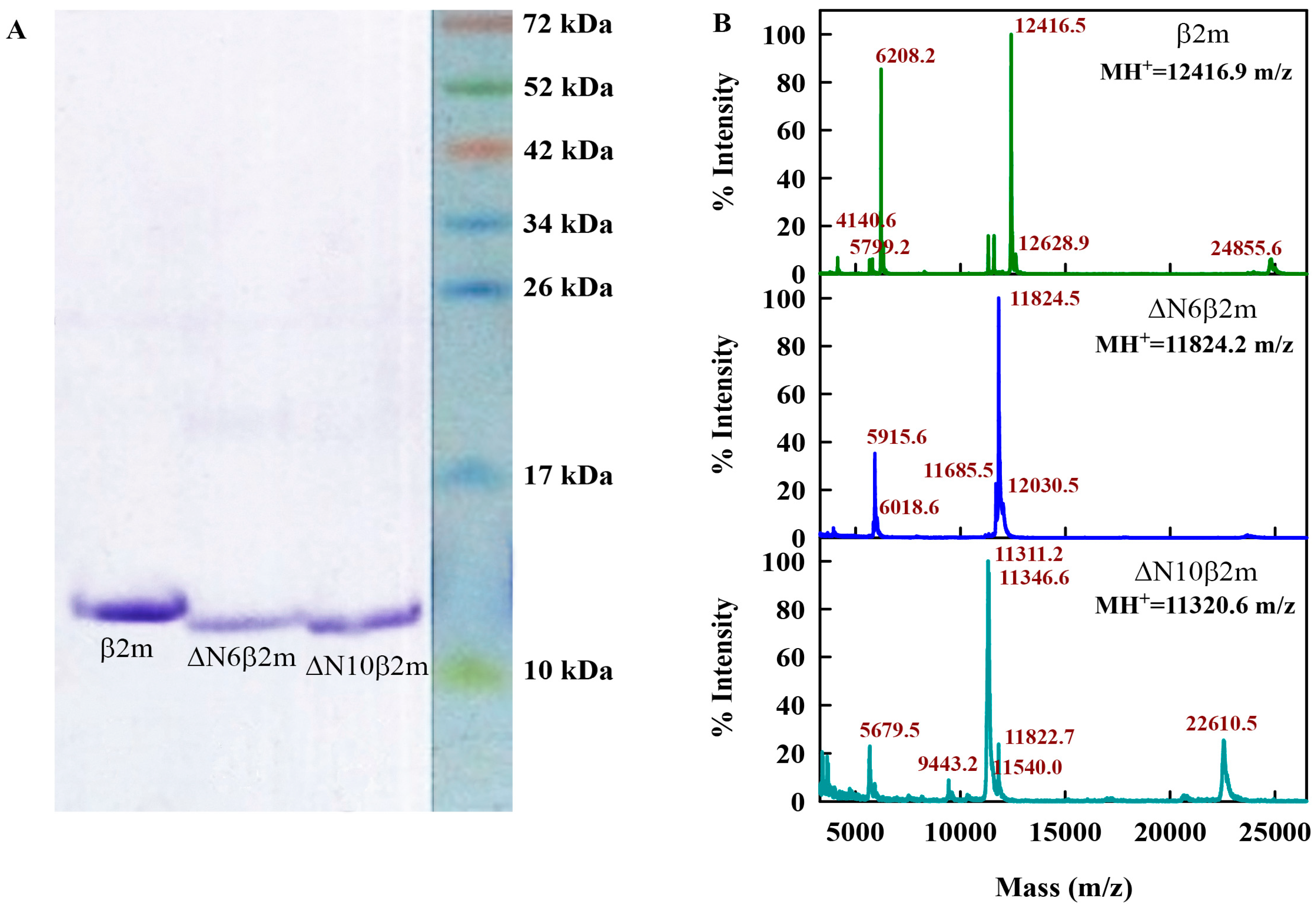 Ijms Free Full Text Structural Features Of Amyloid Fibrils Formed From The Full Length And Truncated Forms Of Beta 2 Microglobulin Probed By Fluorescent Dye Thioflavin T Html Check twist.moe with our free review tool and find out if twist.moe is legit and reliable. fluorescent dye thioflavin t