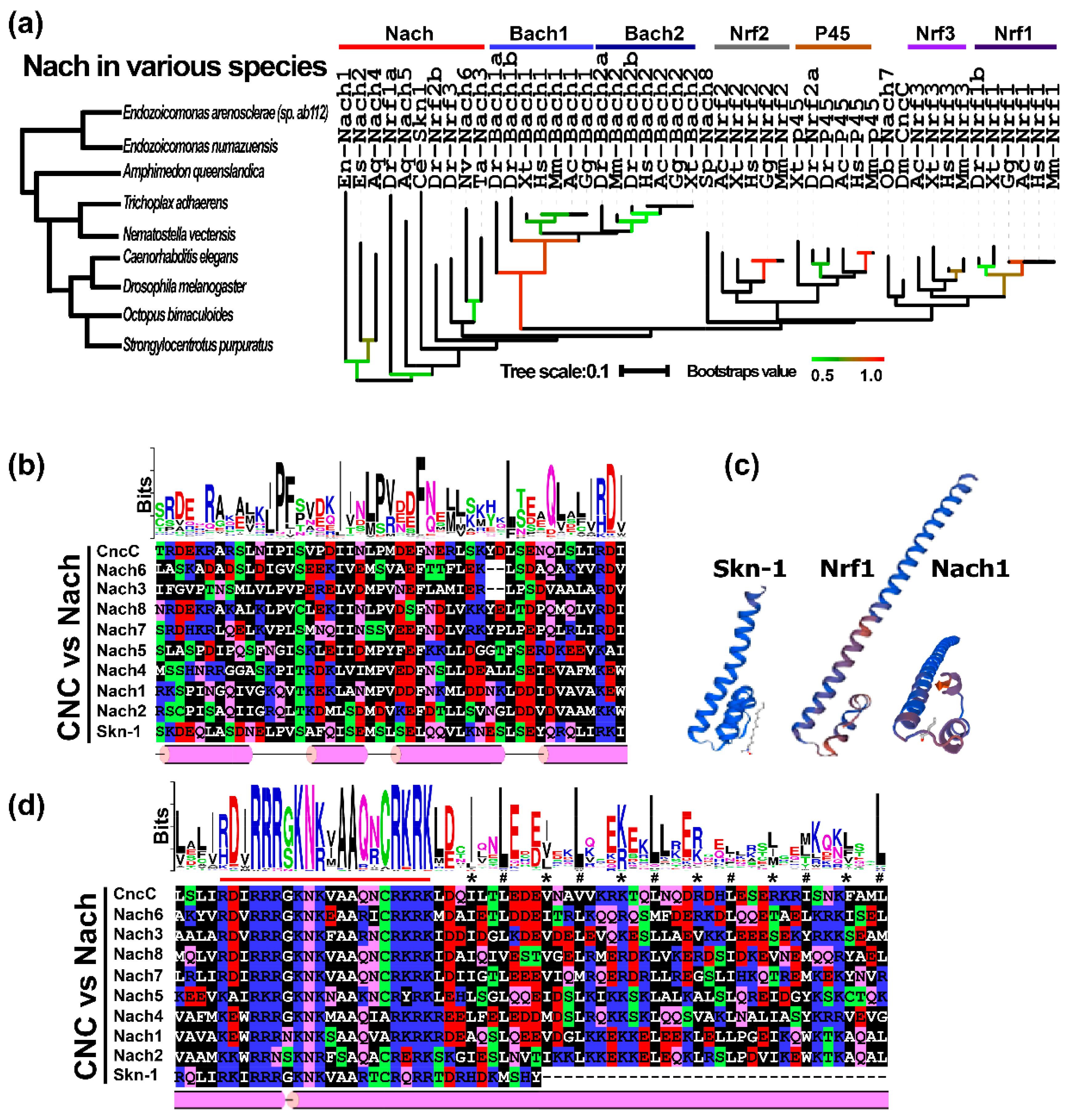 IJMS | Free Full-Text | Nach Is a Novel Subgroup at an Early
