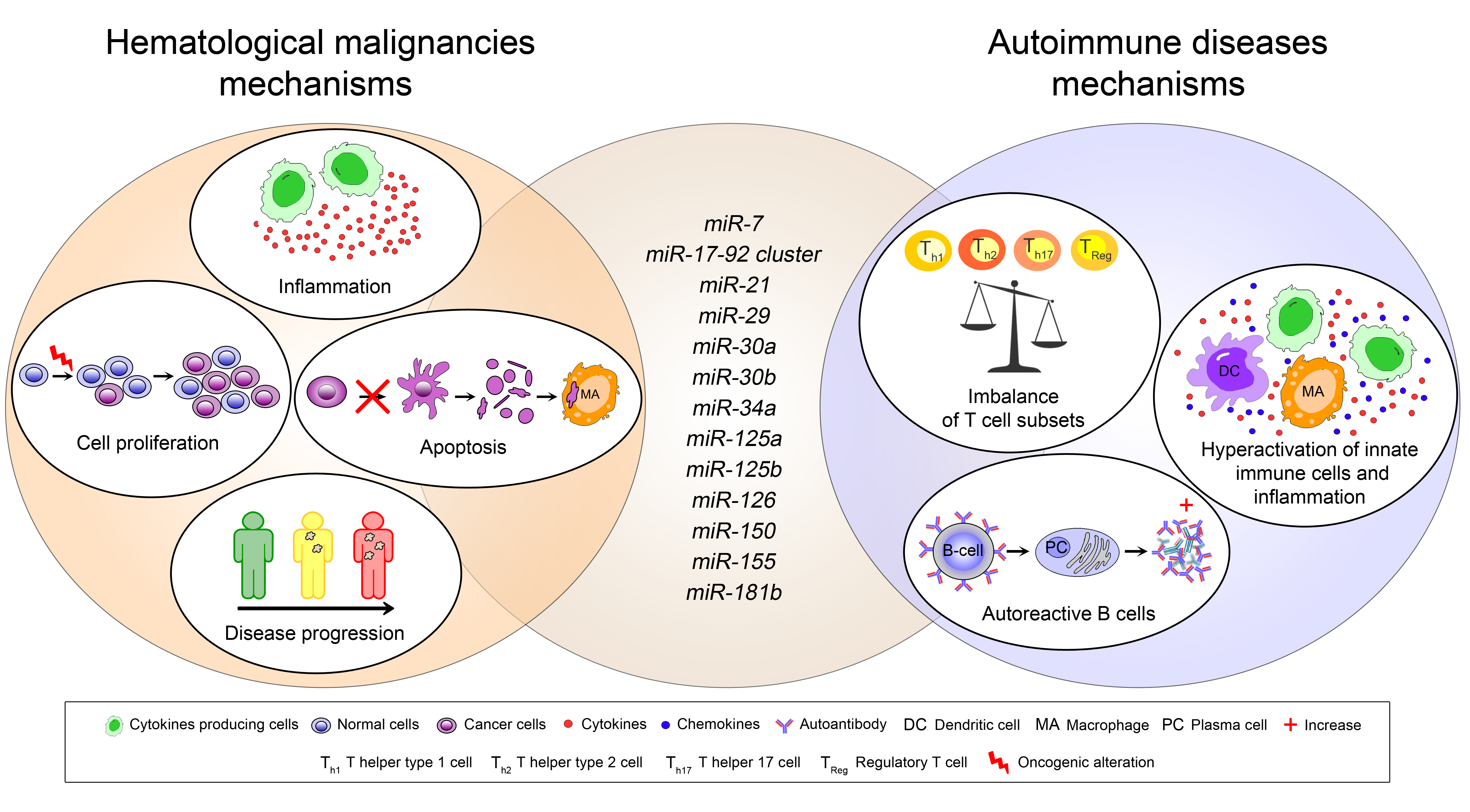 IJMS | Free Full-Text | MicroRNAs in Autoimmunity and Hematological