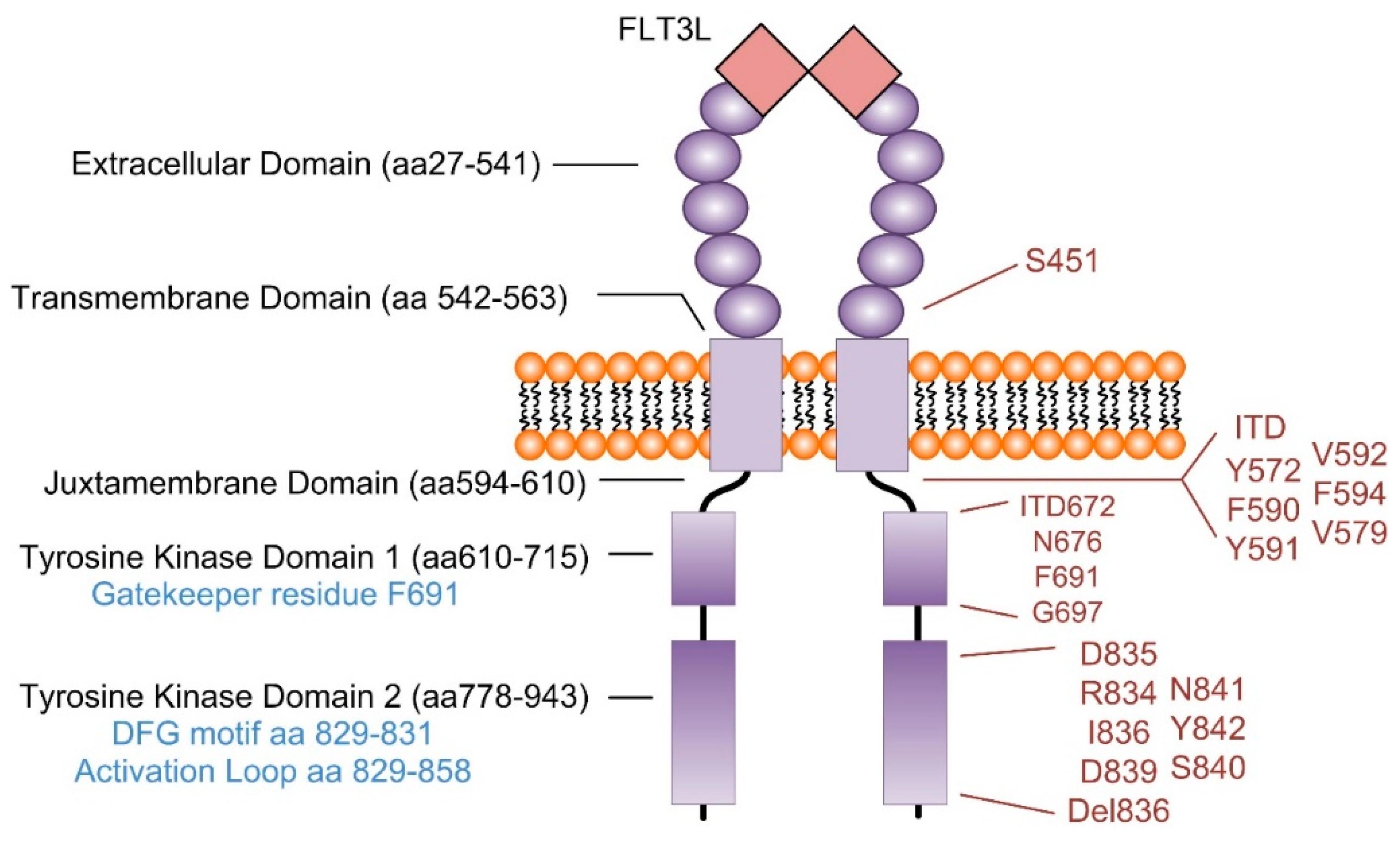 ijms free fulltext targeting oncogenic signaling in