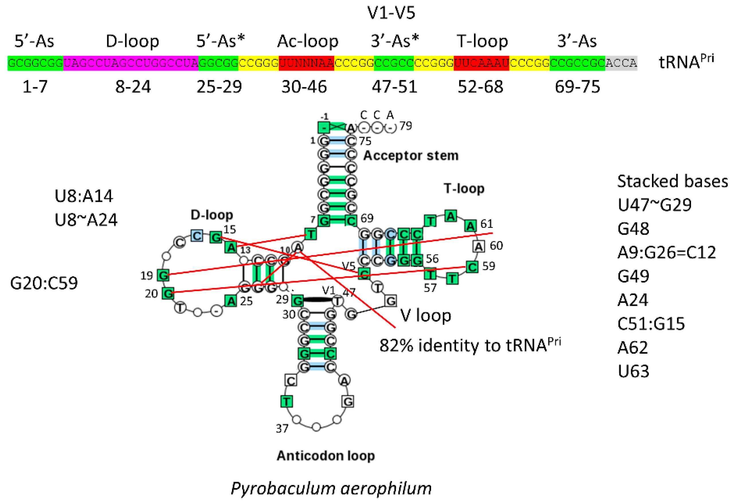 IJMS | Free Full-Text | Type-II tRNAs and Evolution of