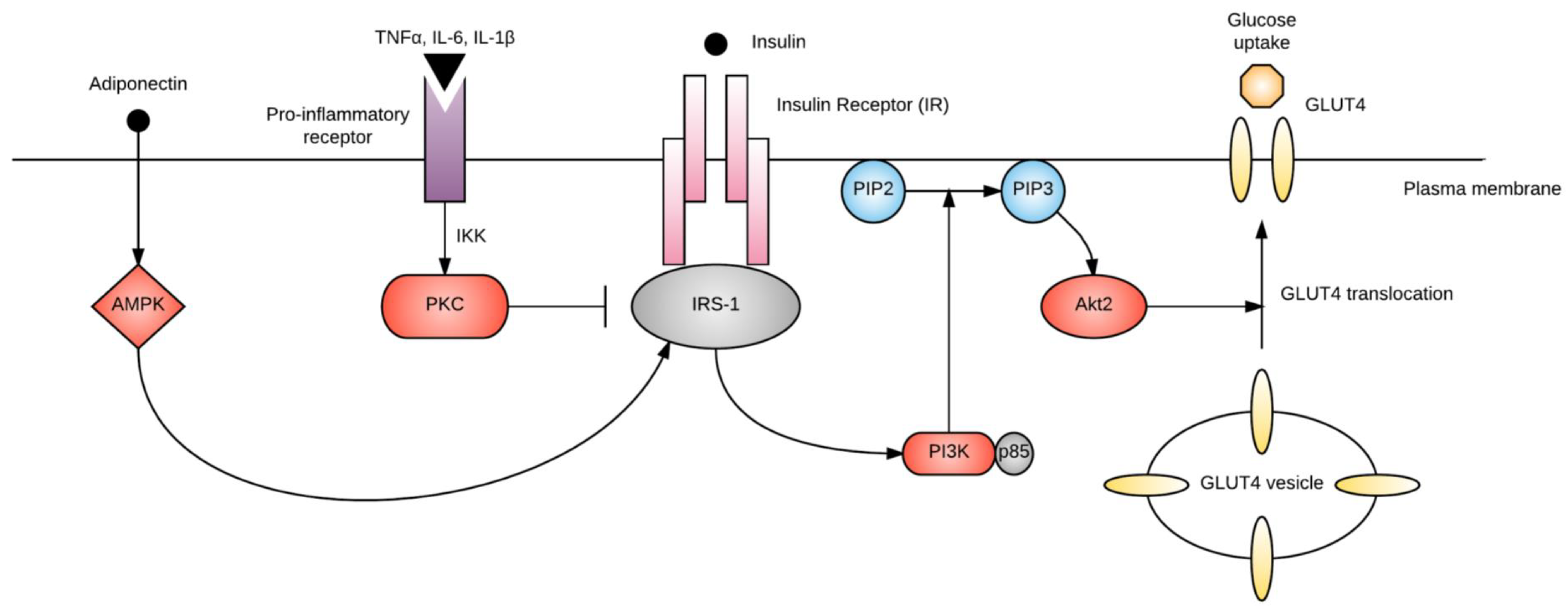 IJMS   Free Full-Text   The Pathophysiology of Gestational ...