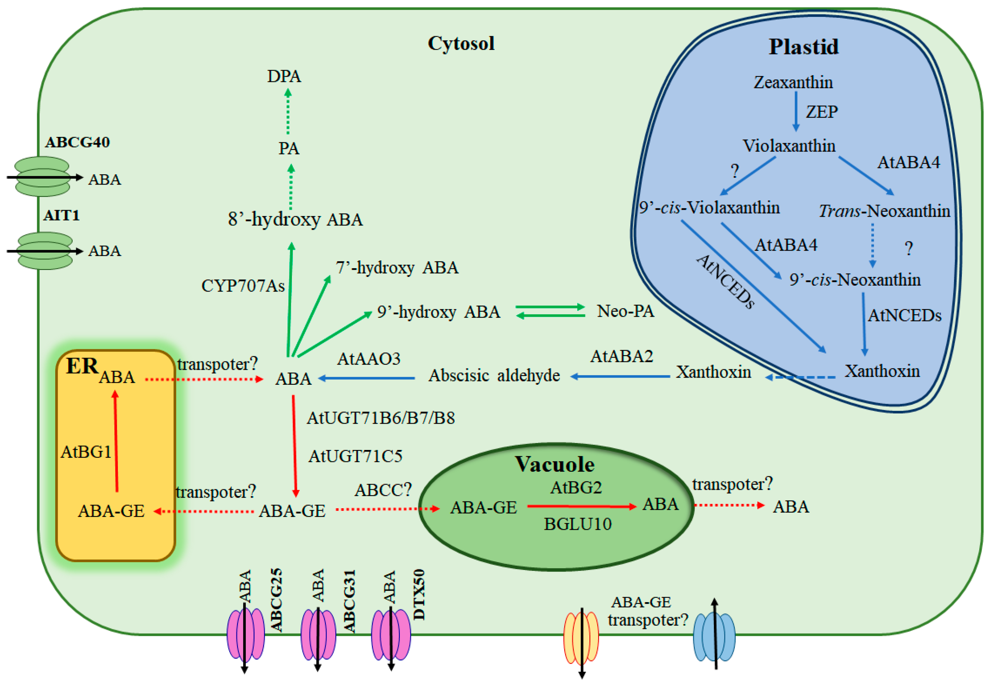 Aba Releases Findings And >> Ijms Free Full Text Molecular Mechanism For The Regulation Of