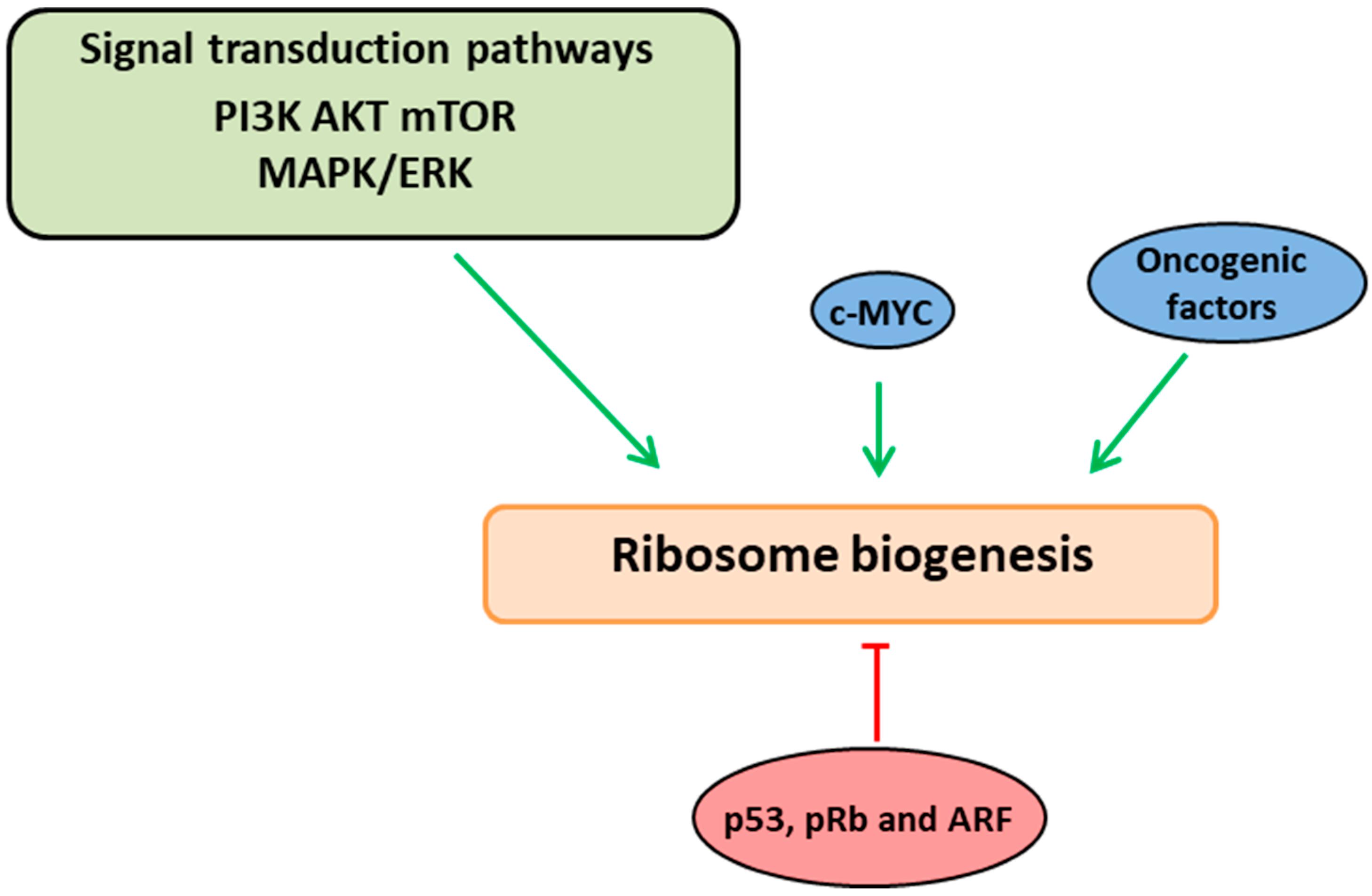 ijms 19 03757 g001 ijms free full text translation stress regulates ribosome