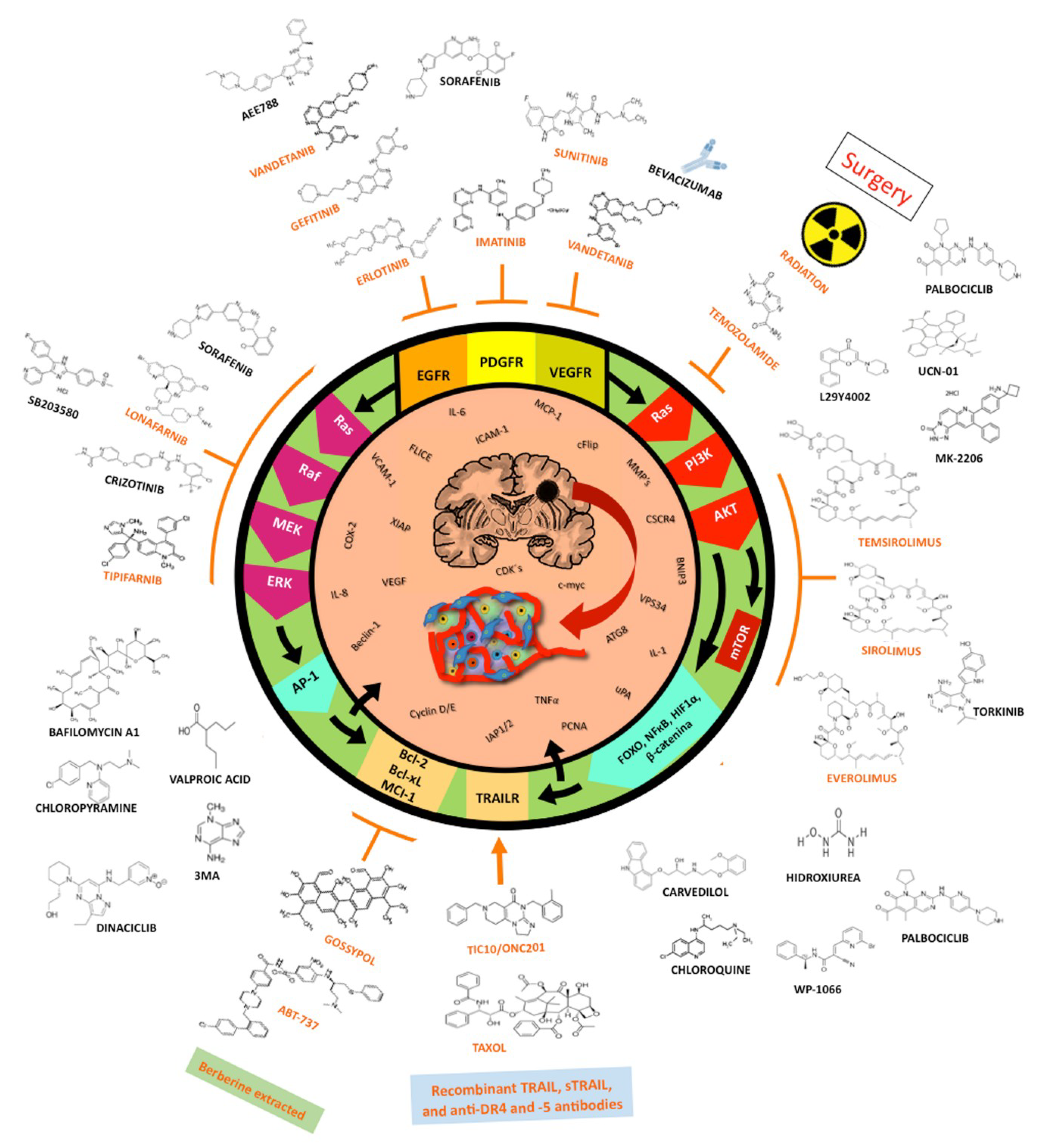 IJMS   Free Full-Text   Autophagic and Apoptotic Pathways as Targets