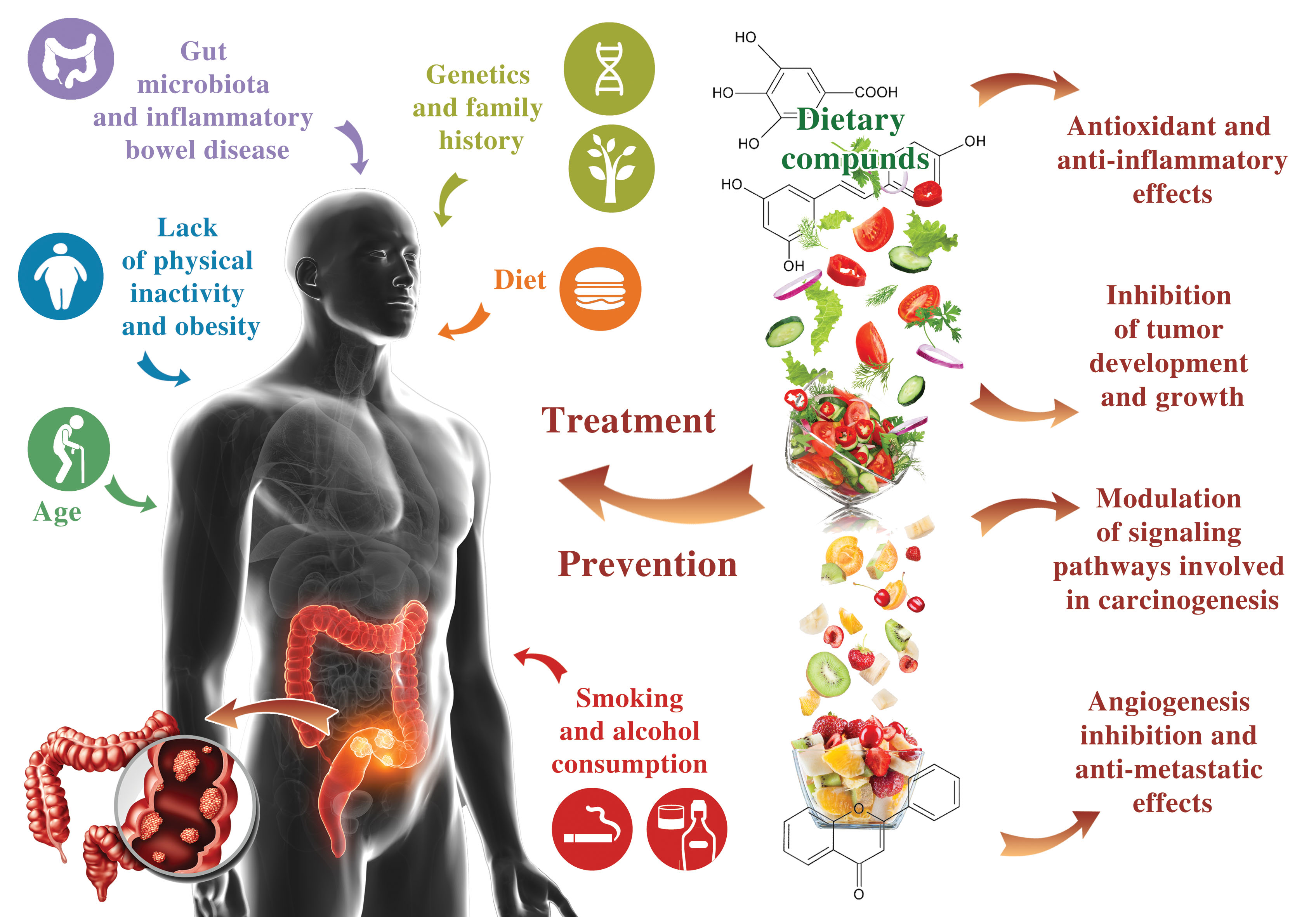 Ijms Free Full Text Chemoprevention Of Colorectal Cancer By Dietary Compounds Html