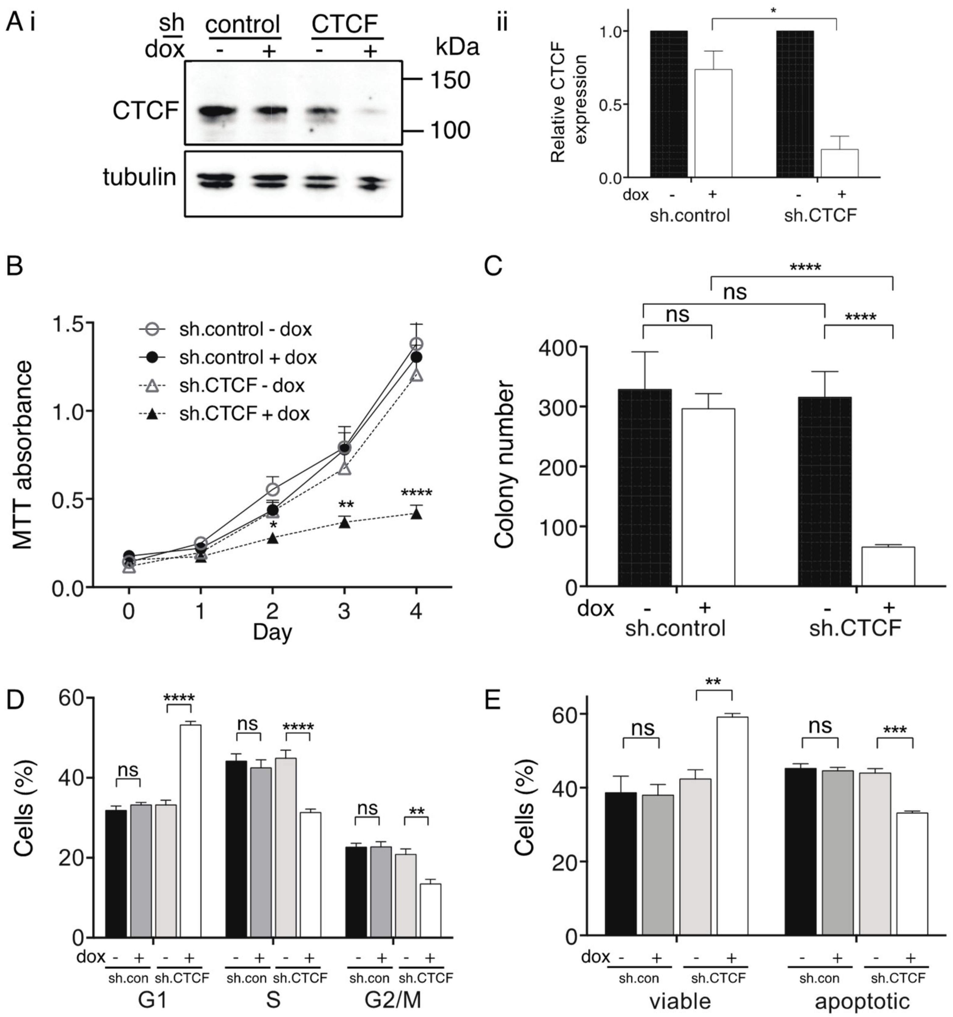 710c1cd962e1 IJMS   Free Full-Text   CTCF Expression is Essential for Somatic ...