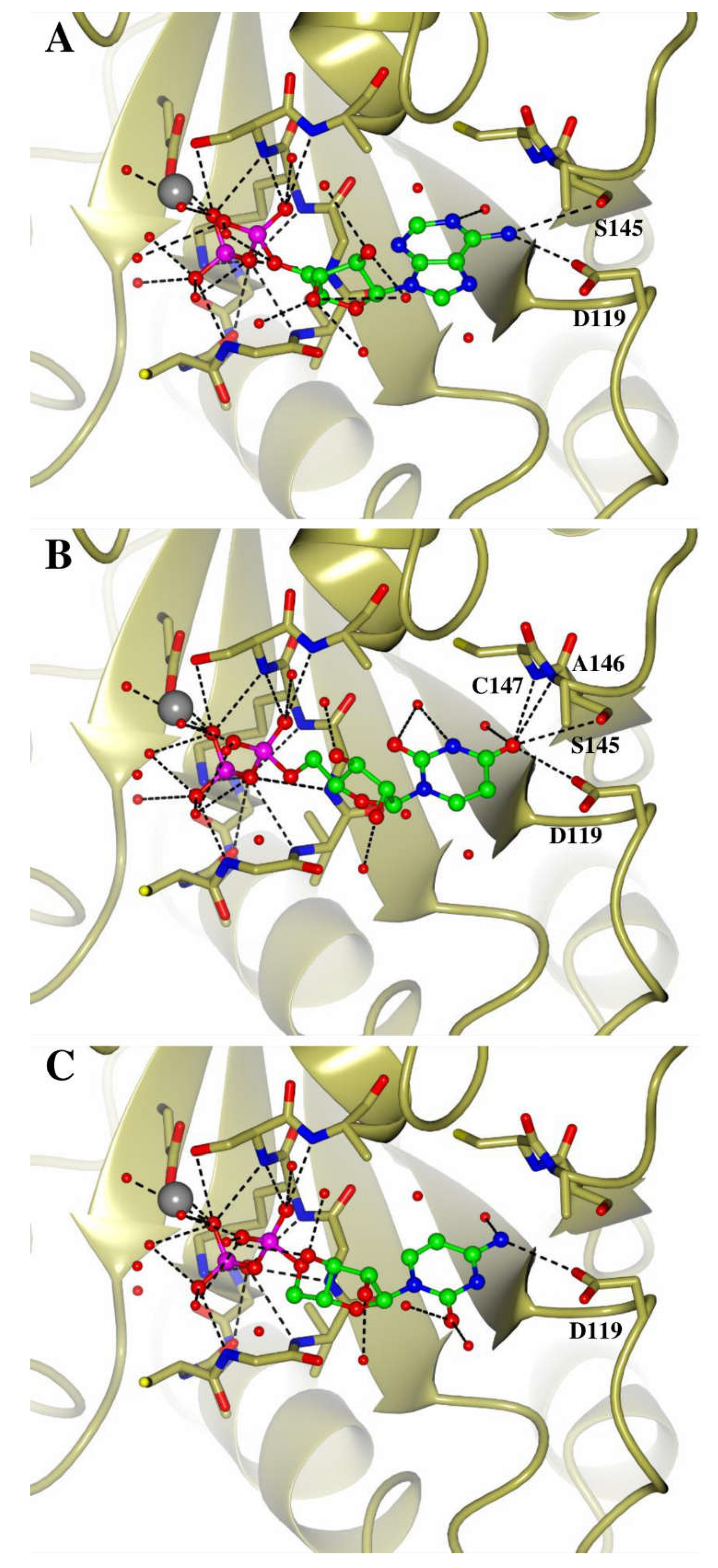 IJMS | Free Full-Text | Human Miro Proteins Act as NTP