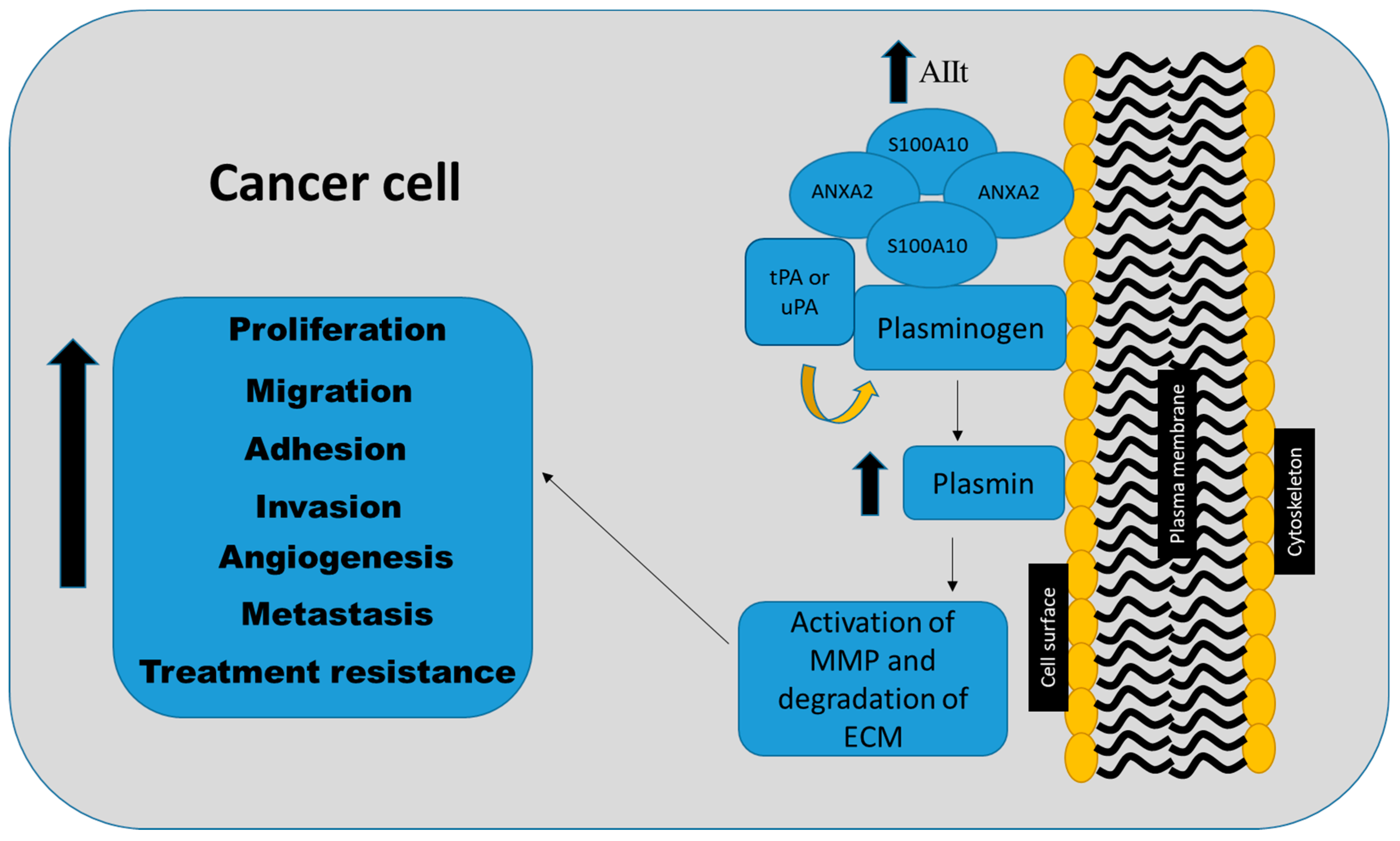 IJMS | Free Full-Text | S100A10 and Cancer Hallmarks